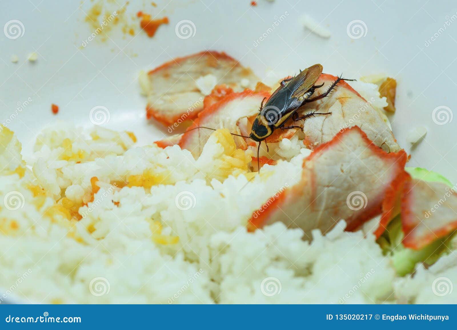 Грязные еда/тараканы есть прожитие еды риса в кухне на доме