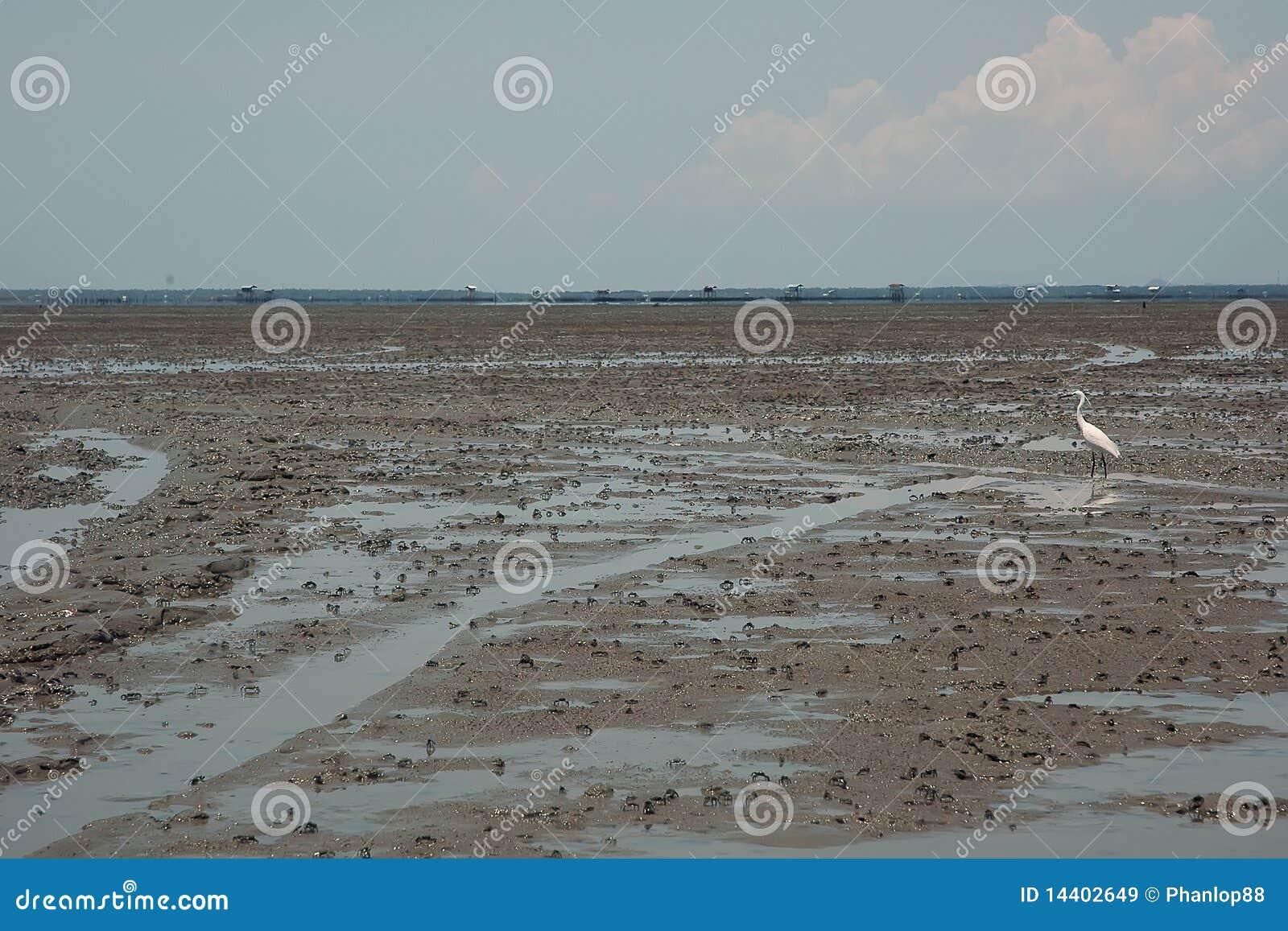 грязь пляжа