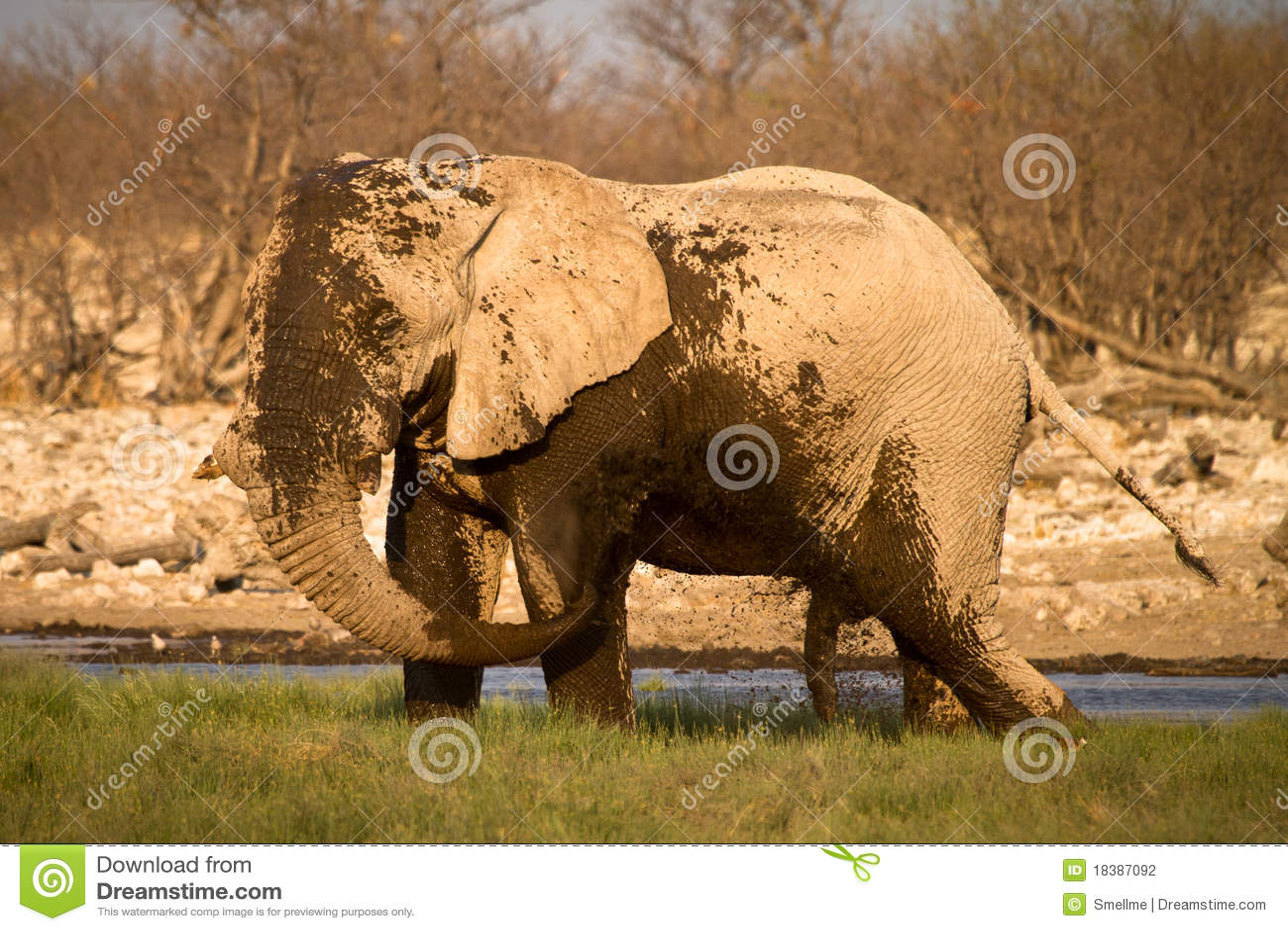 грязь слона