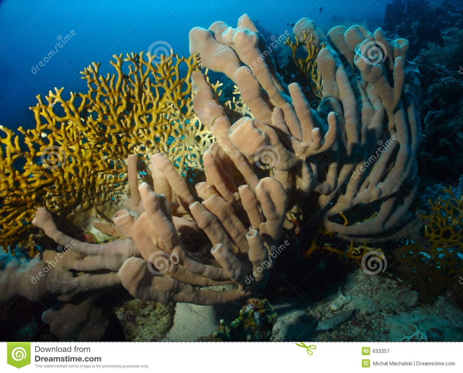 Download губка стоковое изображение. изображение насчитывающей подводно - 633357