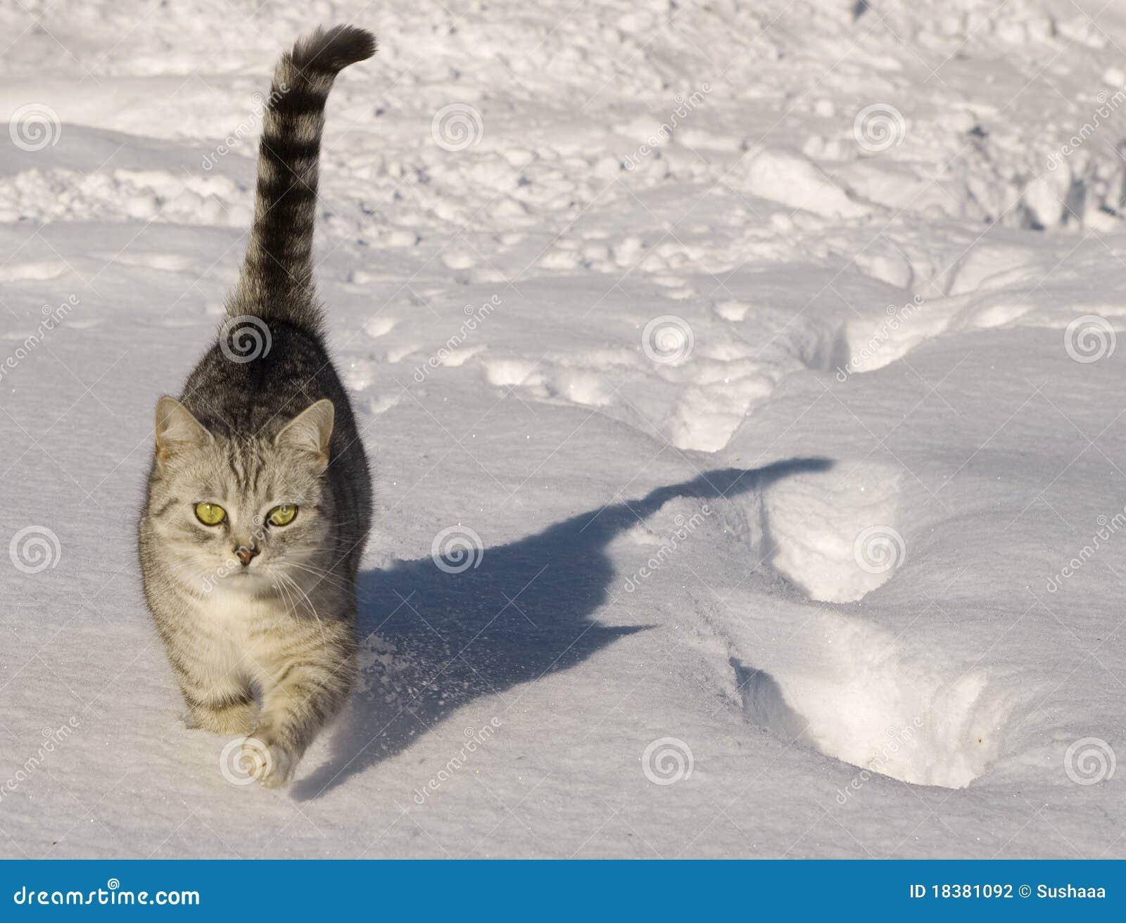 гулять снежка кота