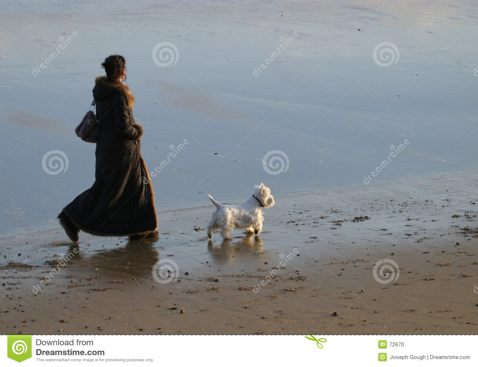 гулять собаки