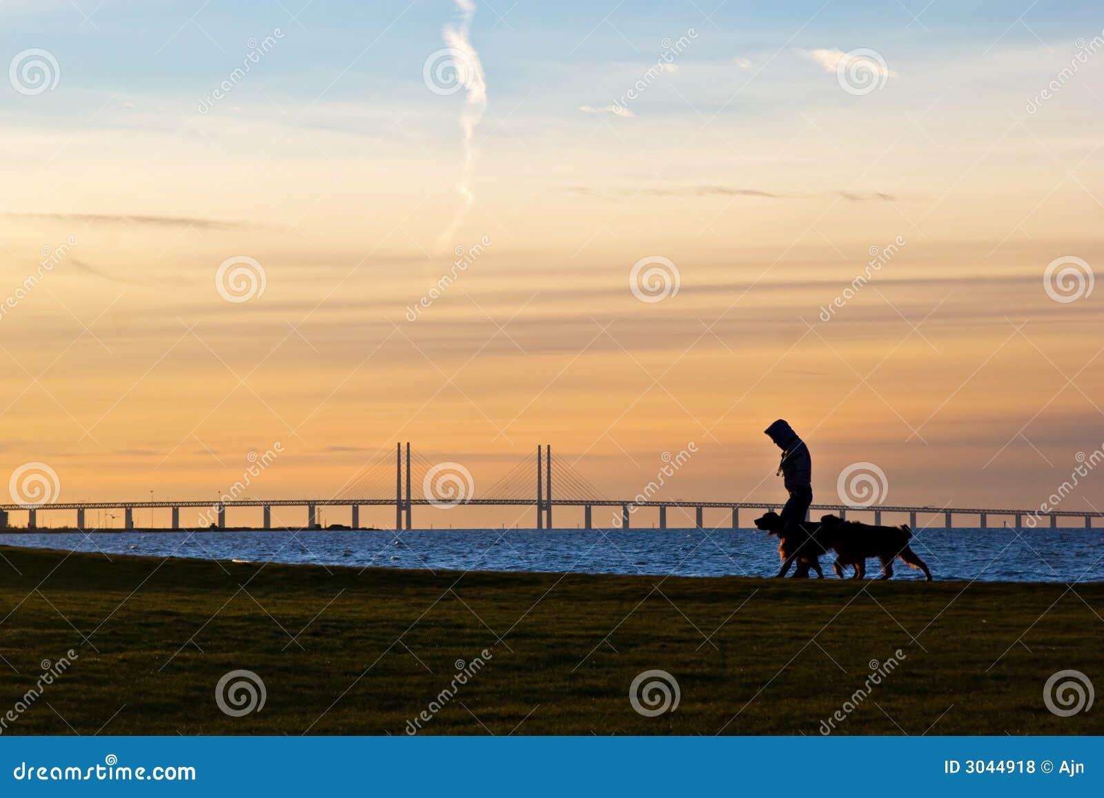 гулять собак