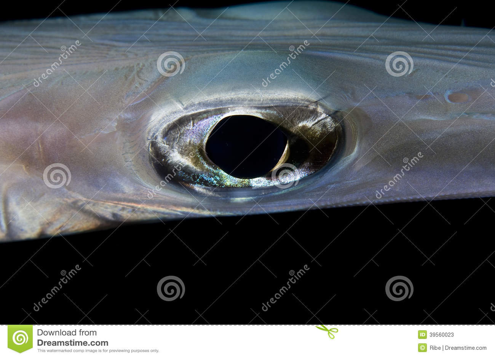 Глаз рыб