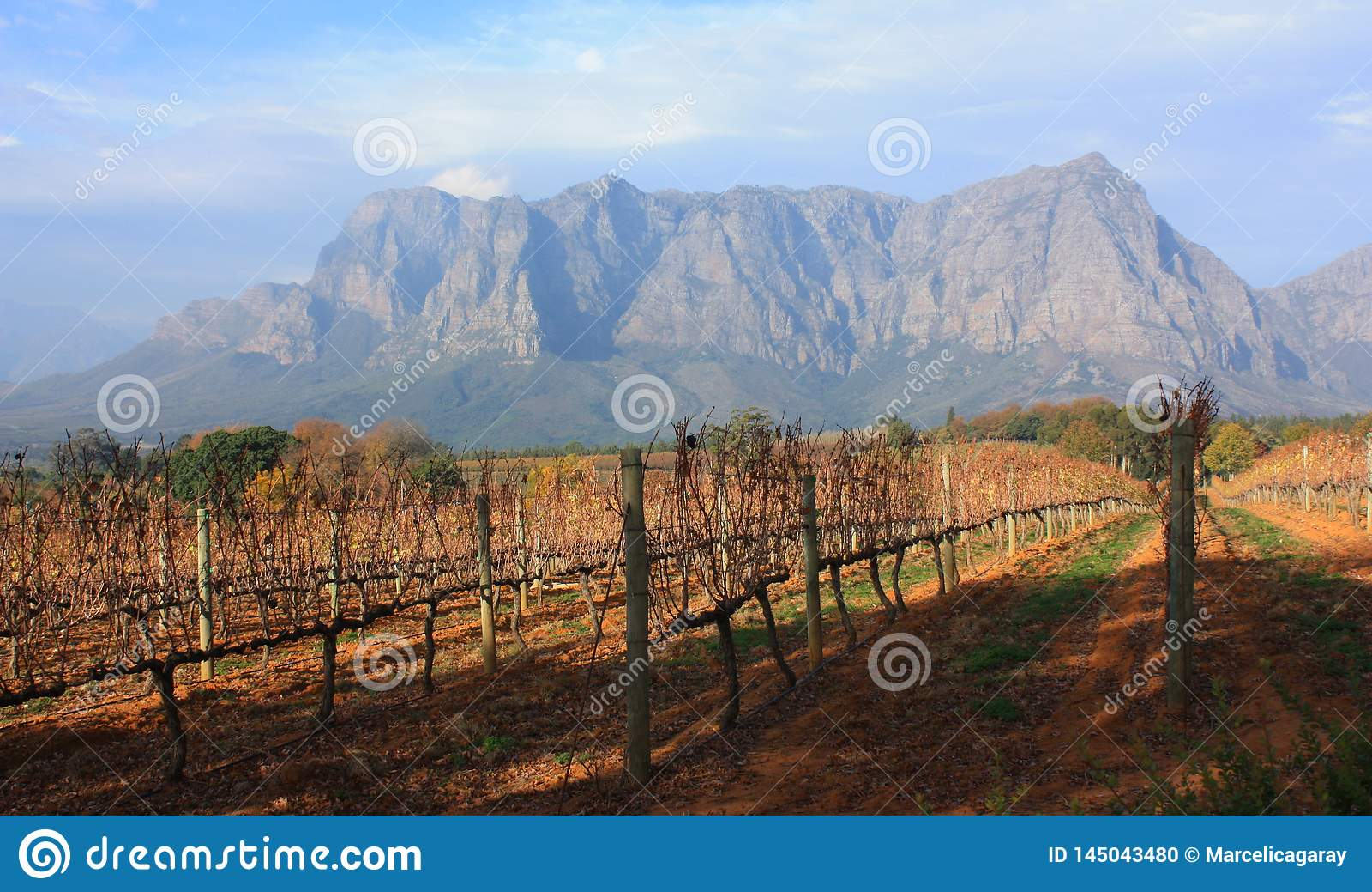 Двор Stellenbosch Южная Африка Delaire Graff лозы