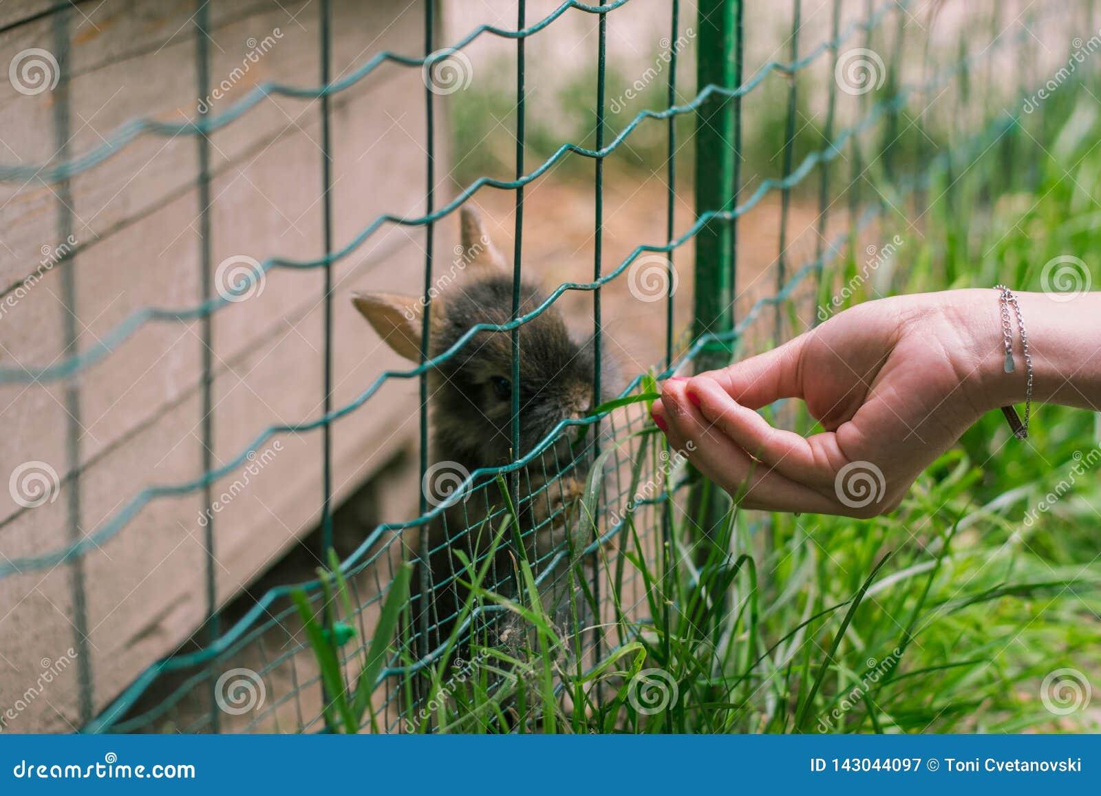 Девушка кормит милые маленькие кроликов в зоопарке
