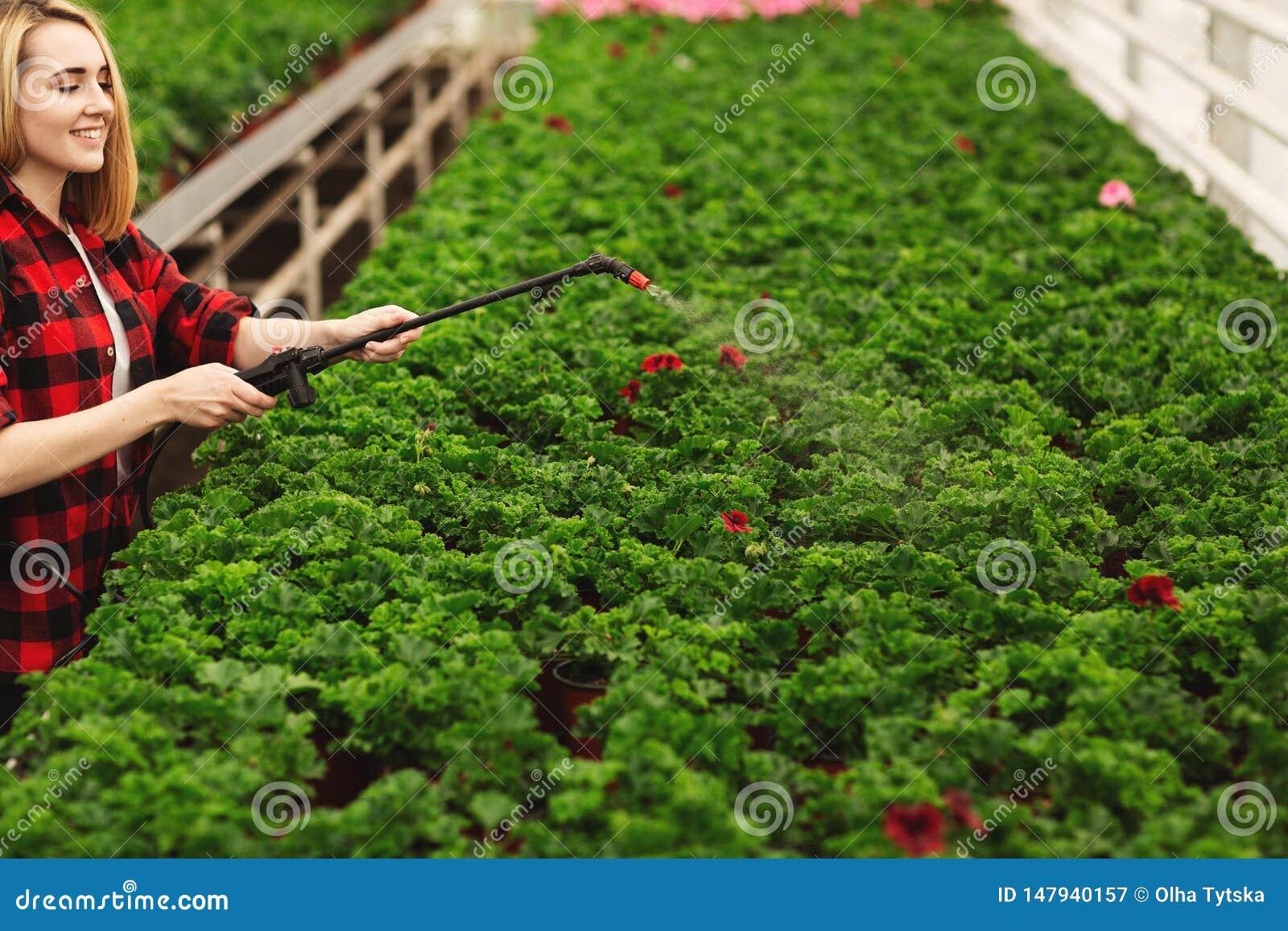 Девушка распыляет заводы Девушка работая в парниках Заводы удобрения