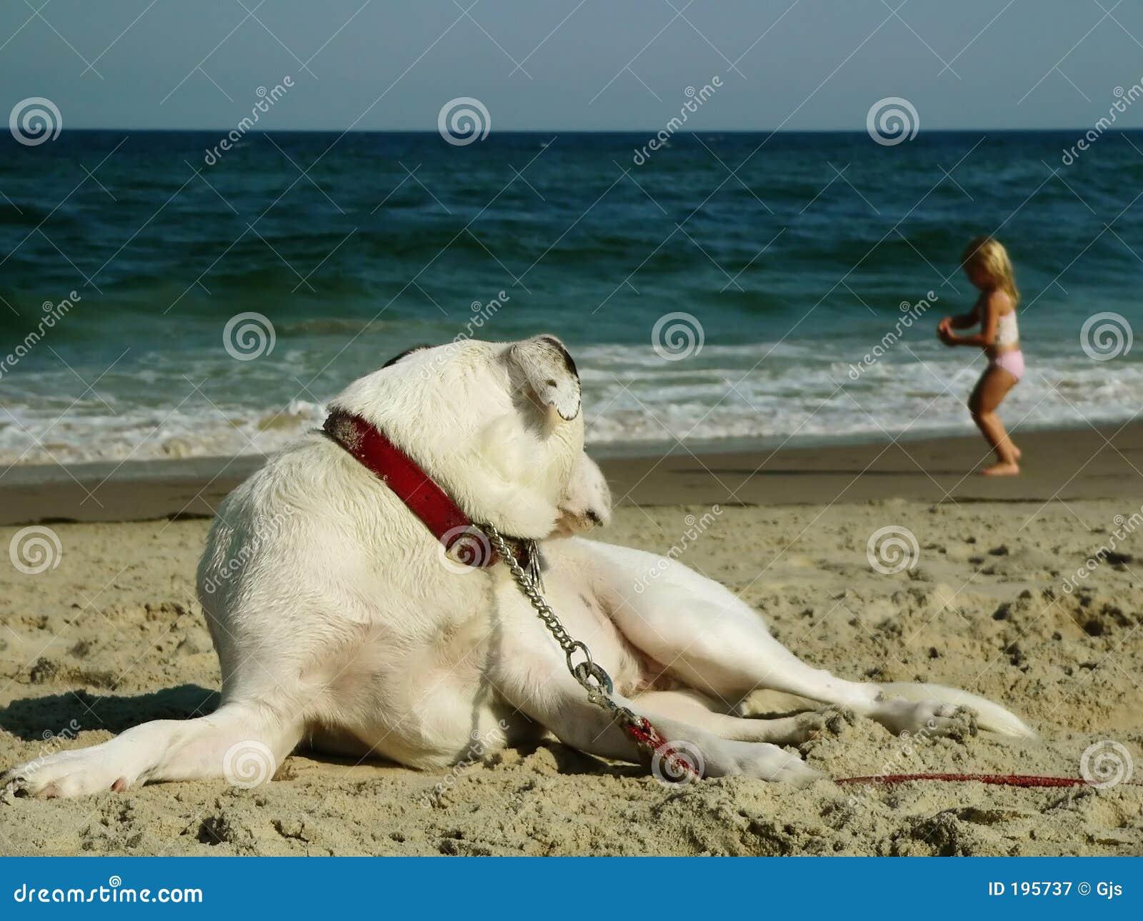 девушка собаки пляжа