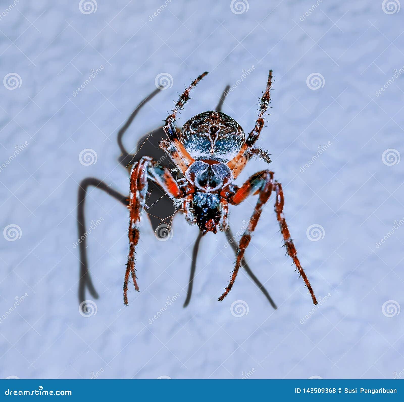 Девушка танцев на красочном пауке