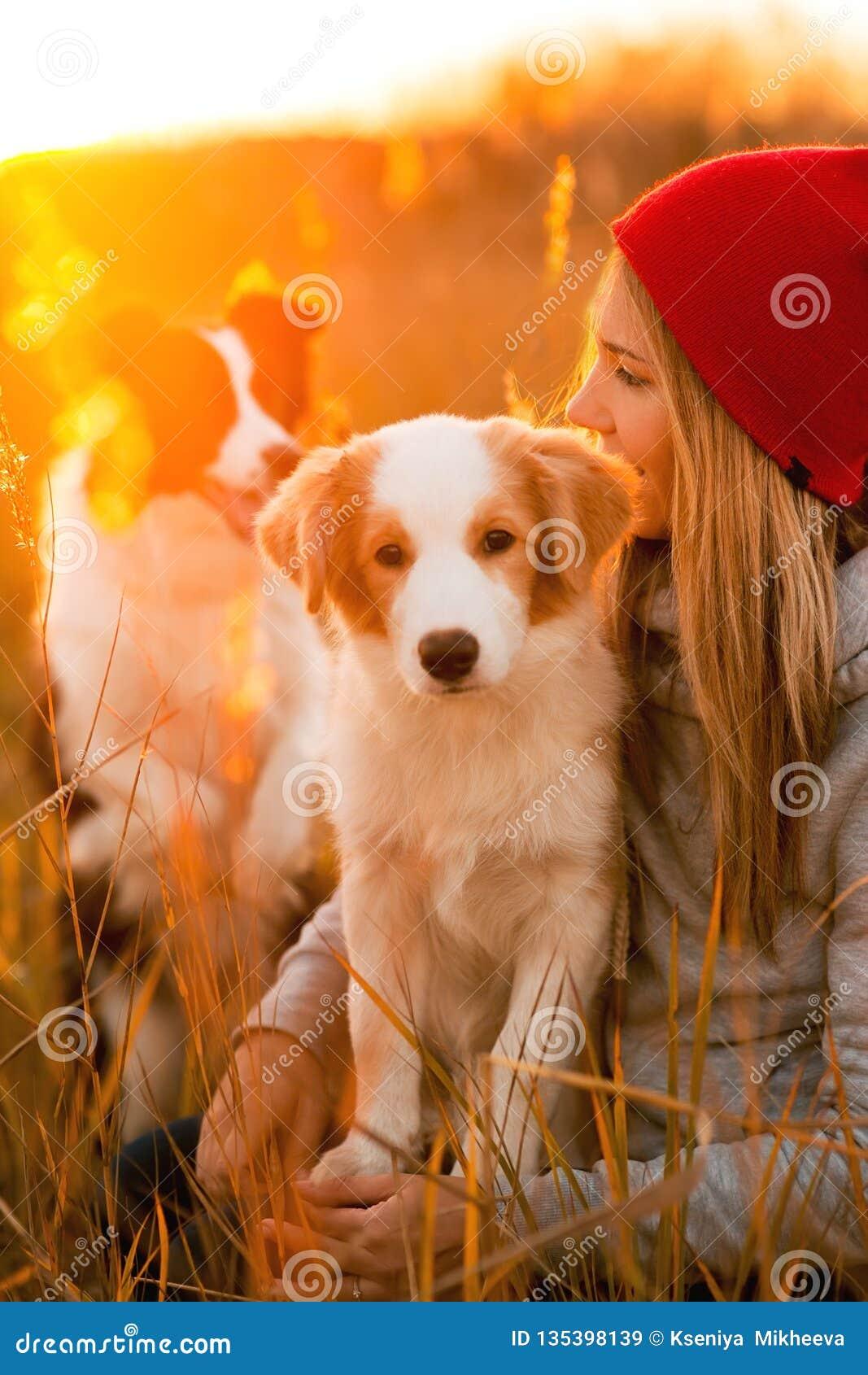 Девушка улыбки с крутым щенком собаки Коллиы границы 2 положенным на зеленое поле заход солнца неба на предпосылке