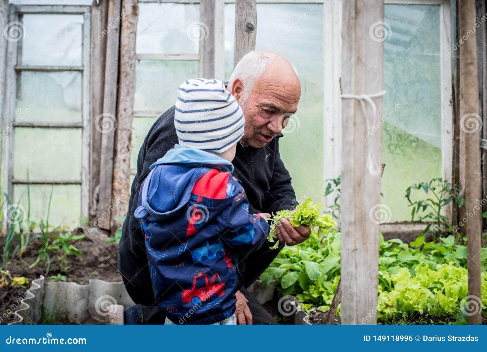 Дед показывая овощи к его ребенк