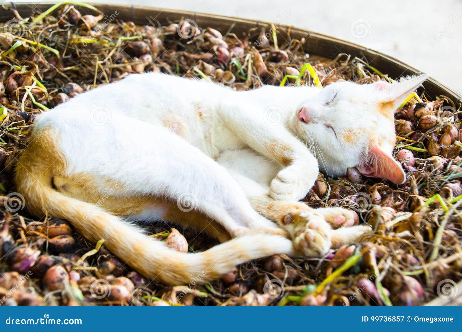 Действие сна кота pussy на земле земли