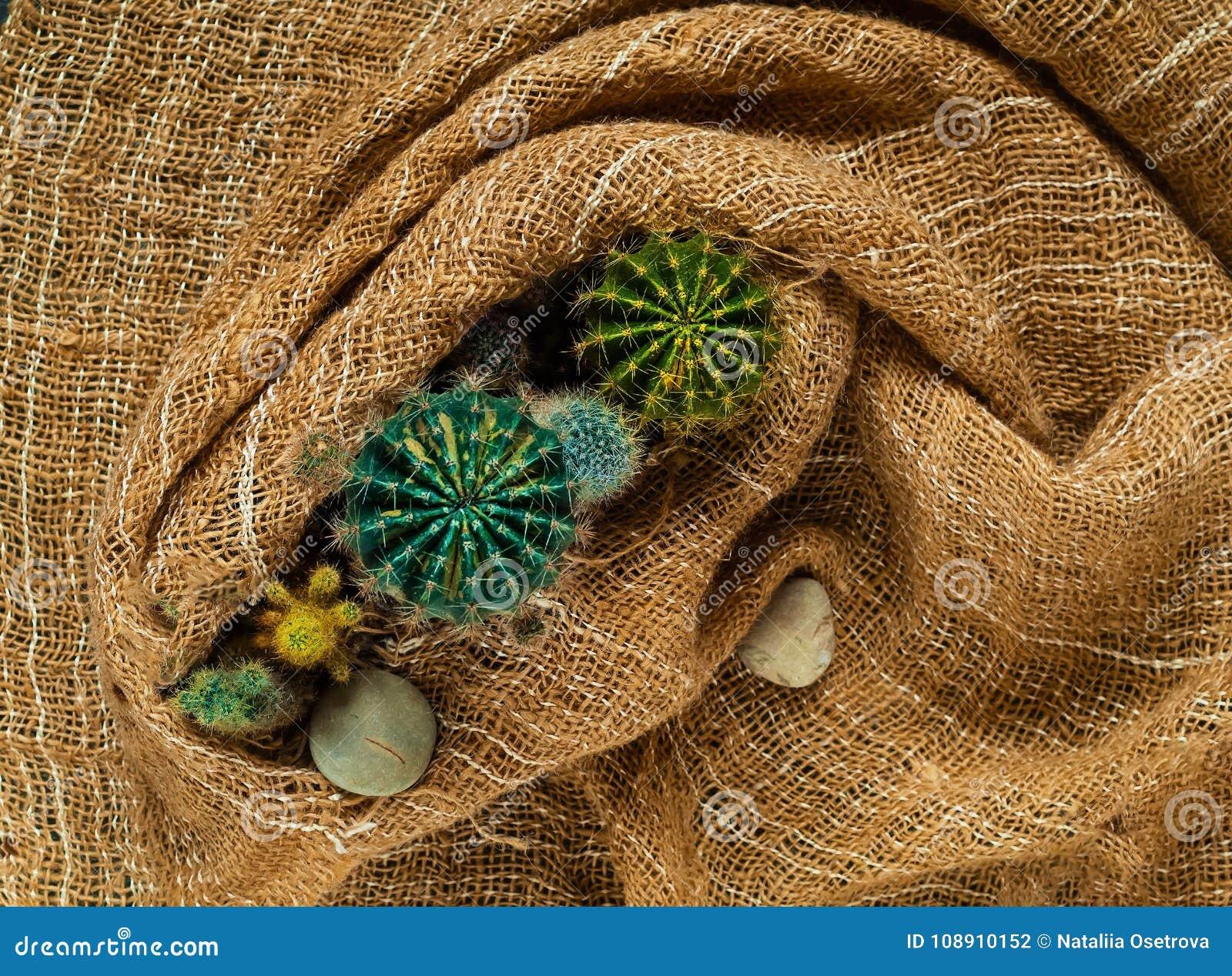 Декоративный малый покрашенный кактус на предпосылке мешковины, взгляд сверху, открытом космосе для текста