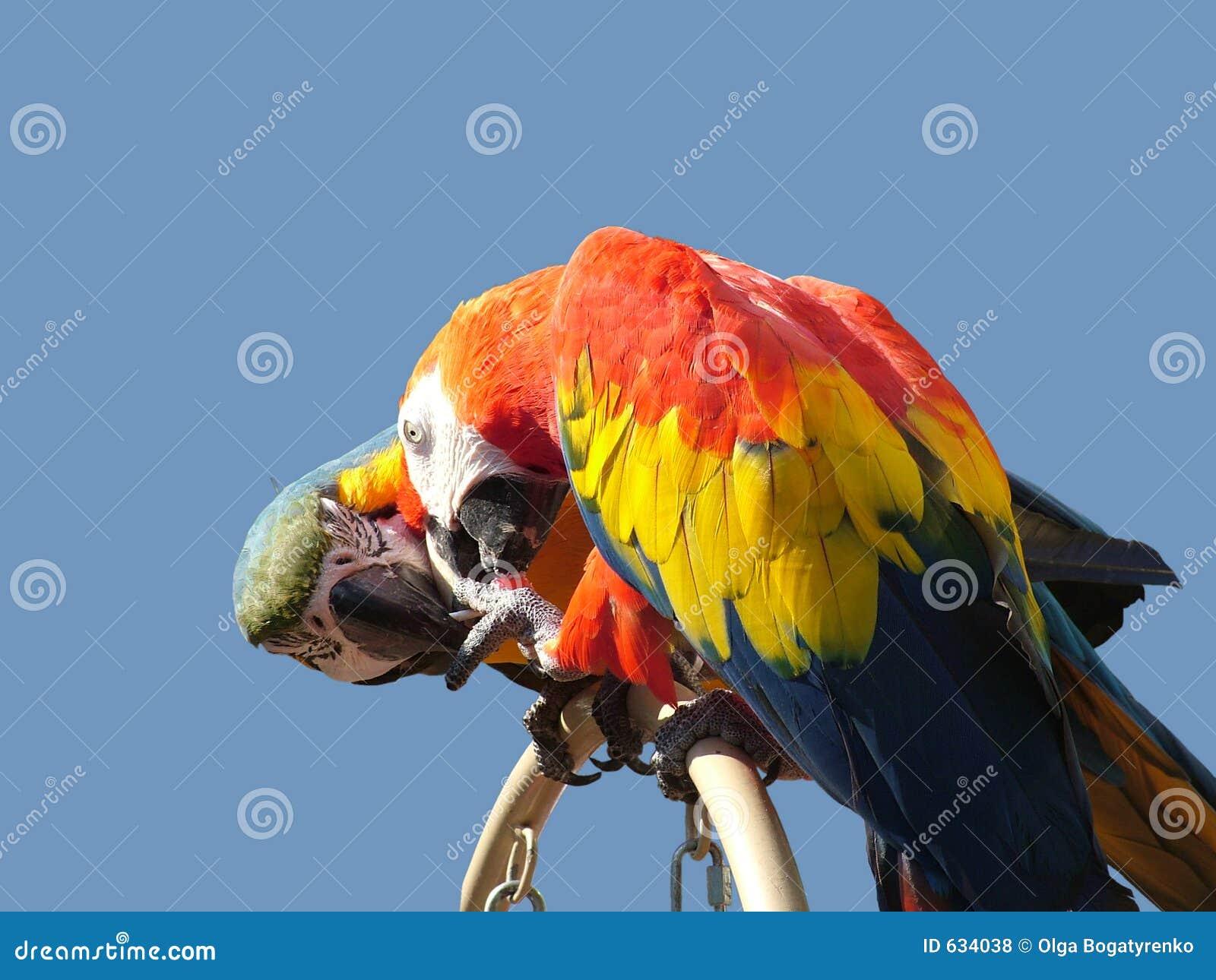 Download делить влюбленности конфеты птиц Стоковое Фото - изображение насчитывающей сыгранность, драка: 634038