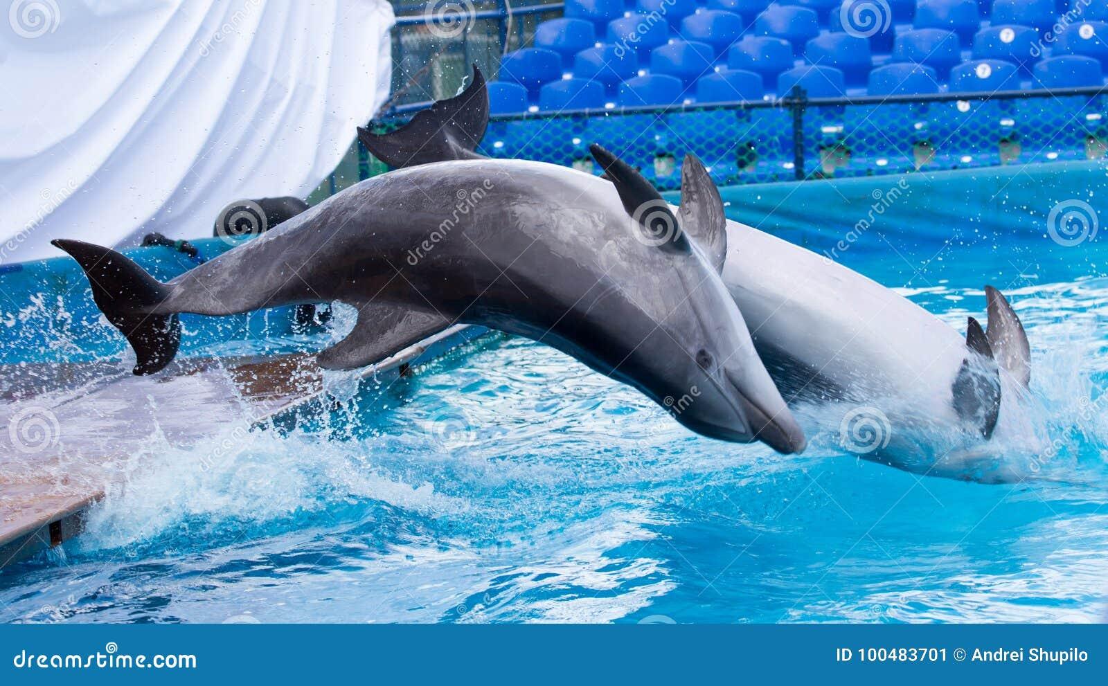 2 дельфина скача в бассейн