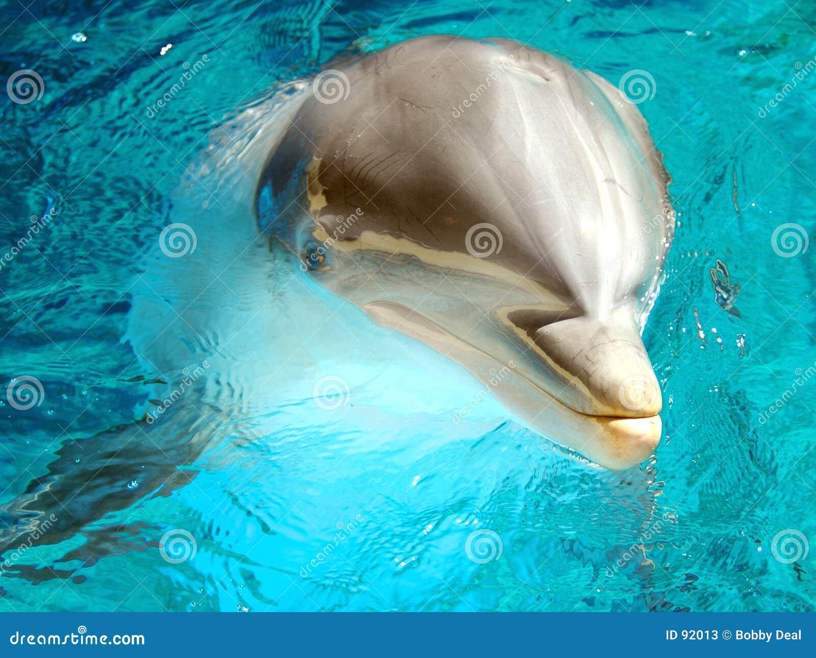 дельфин bottlenose 3