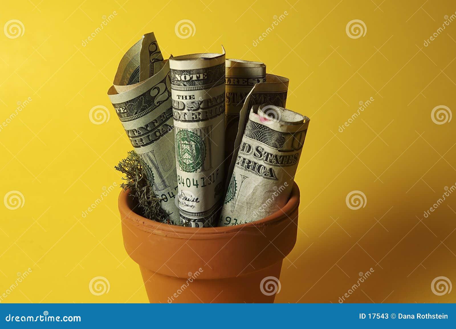 деньги potted