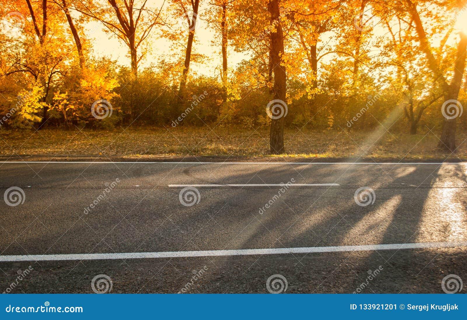 День осени с деревьями и желтой листвой