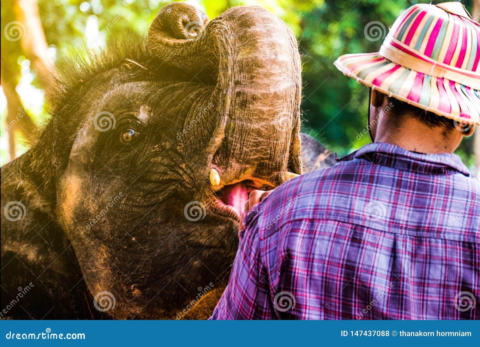 Деревня слона