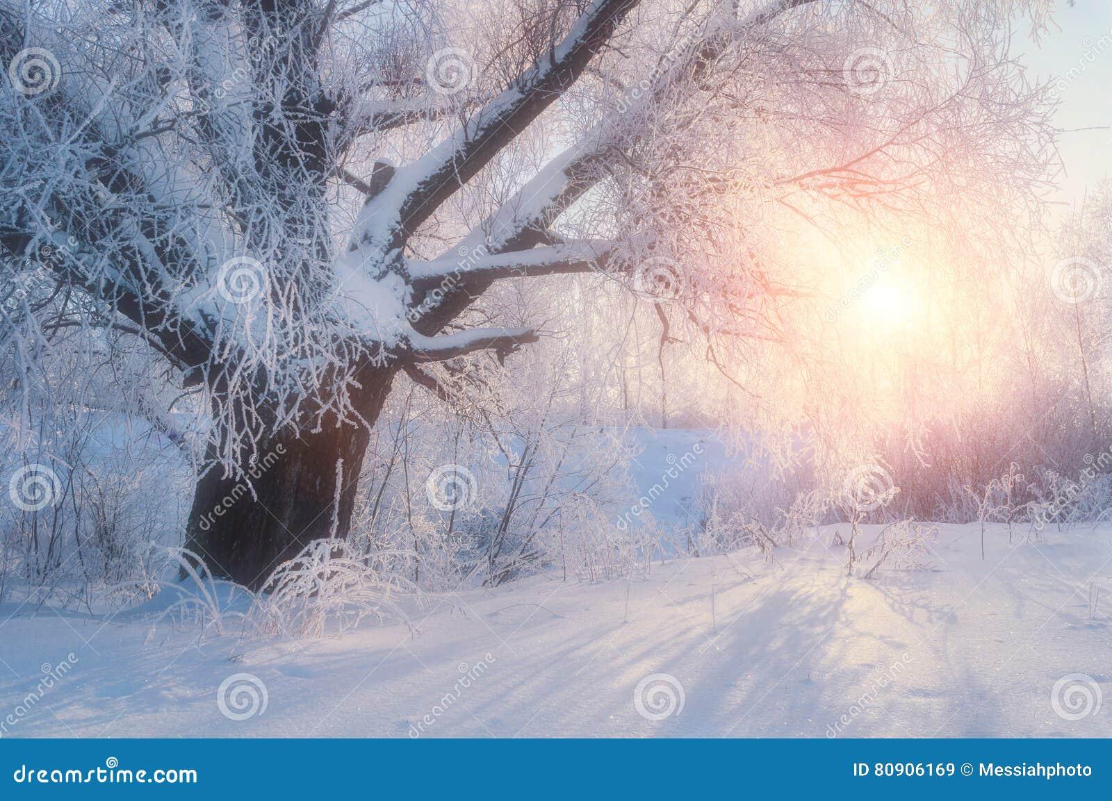 Дерево ландшафт-зимы зимы в сцене страны чудес ландшафта зимы леса восхода солнца