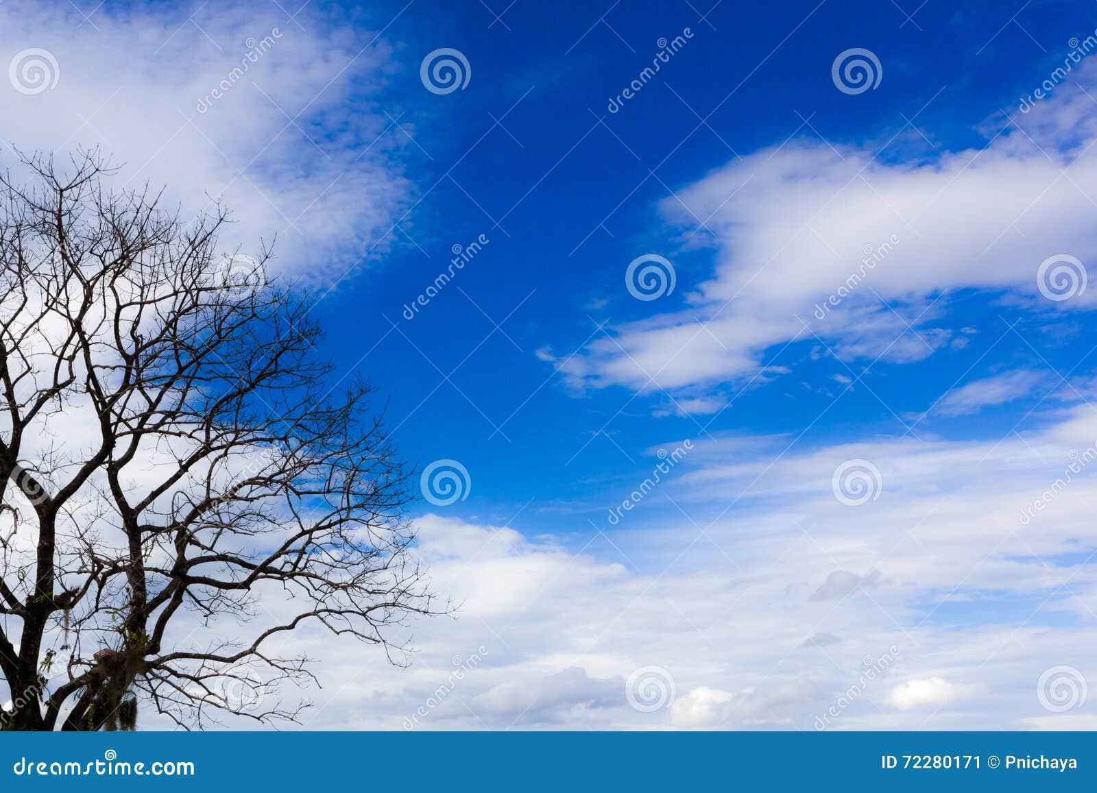 Download Дерево без листьев, голубого неба и белой предпосылки облака Стоковое Изображение - изображение насчитывающей место, вал: 72280171