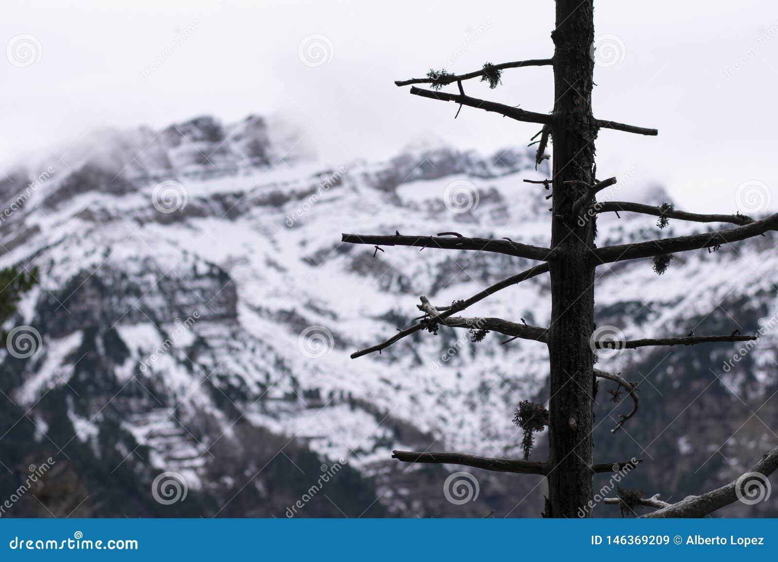 Дерево без листьев со снежной горой на заднем плане