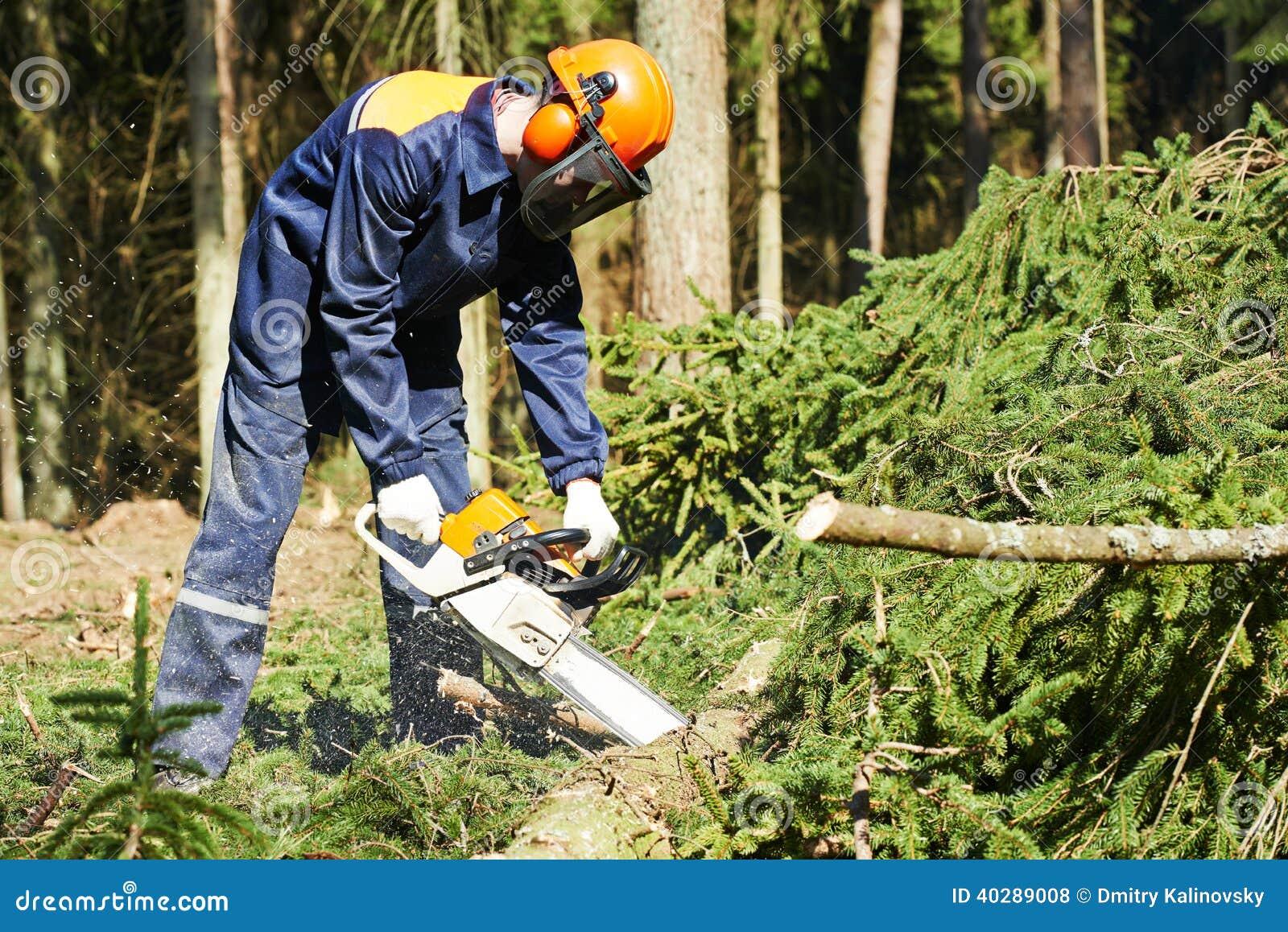 Дерево вырезывания Lumberjack в лесе