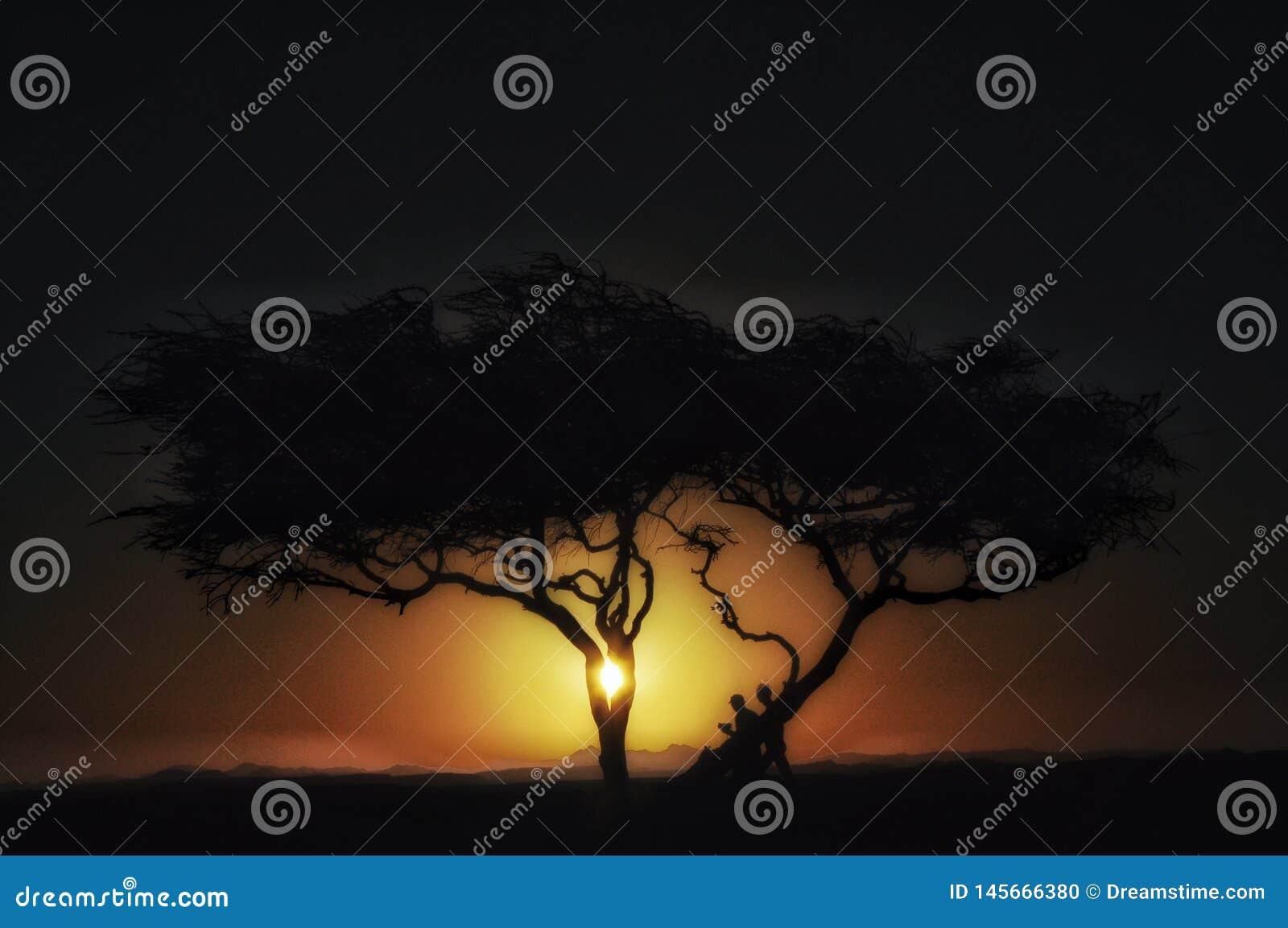 Дерево в пустыне на силуэте захода солнца дерева в дюнах в Африке с горами