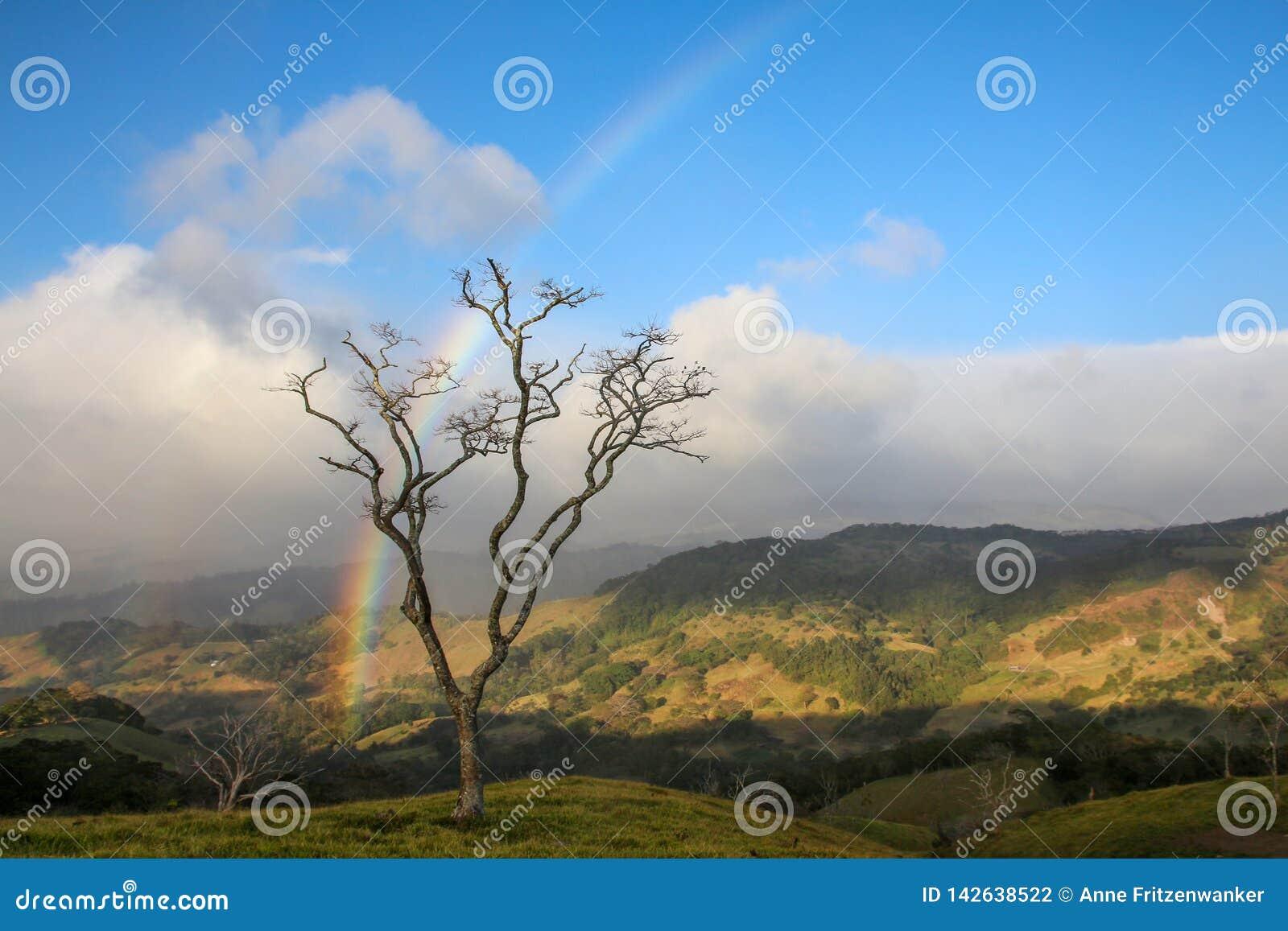 Дерево в Monteverde Коста-Рика