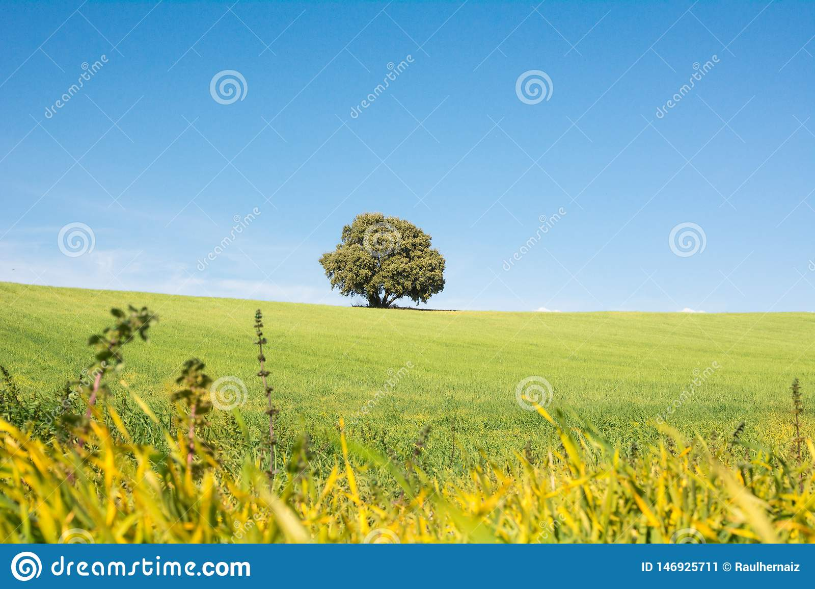 Дерево изолированное на зеленом поле, под чистым голубым небом
