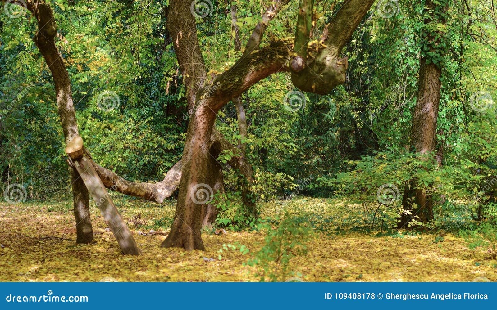 Дерево искривлянное осенью на ботаническом саде