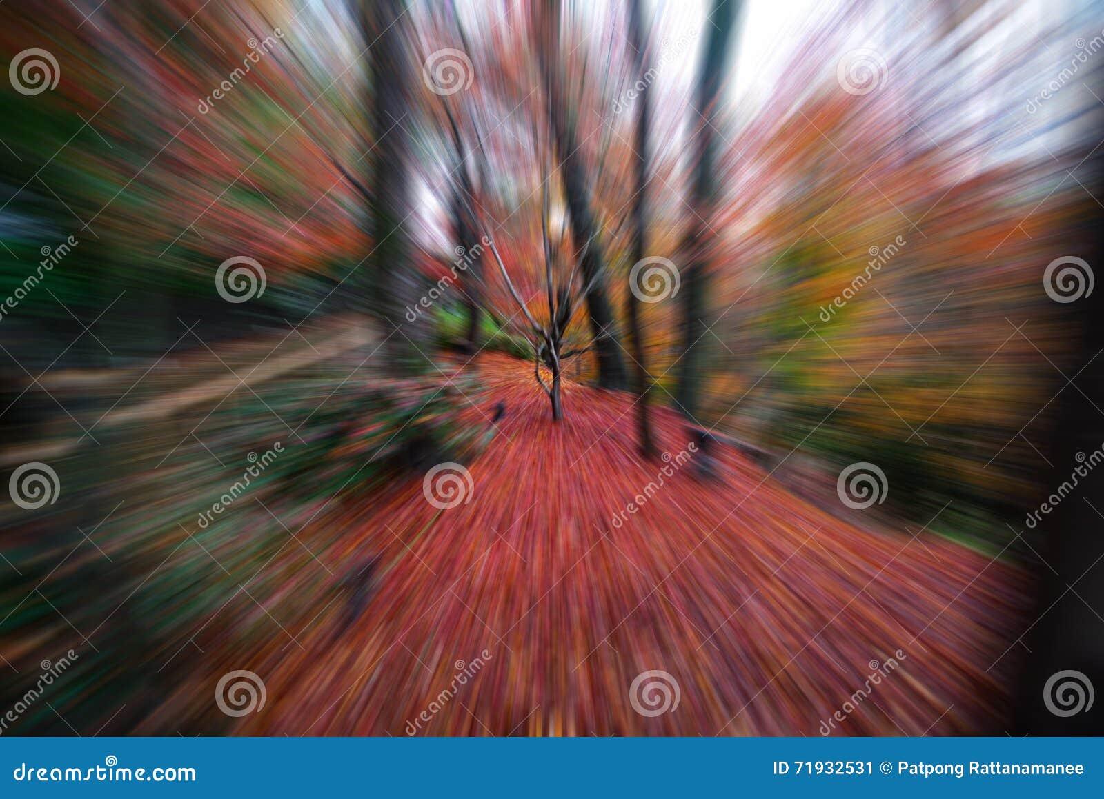 Дерево клена в осени Японии с влиянием сигнала