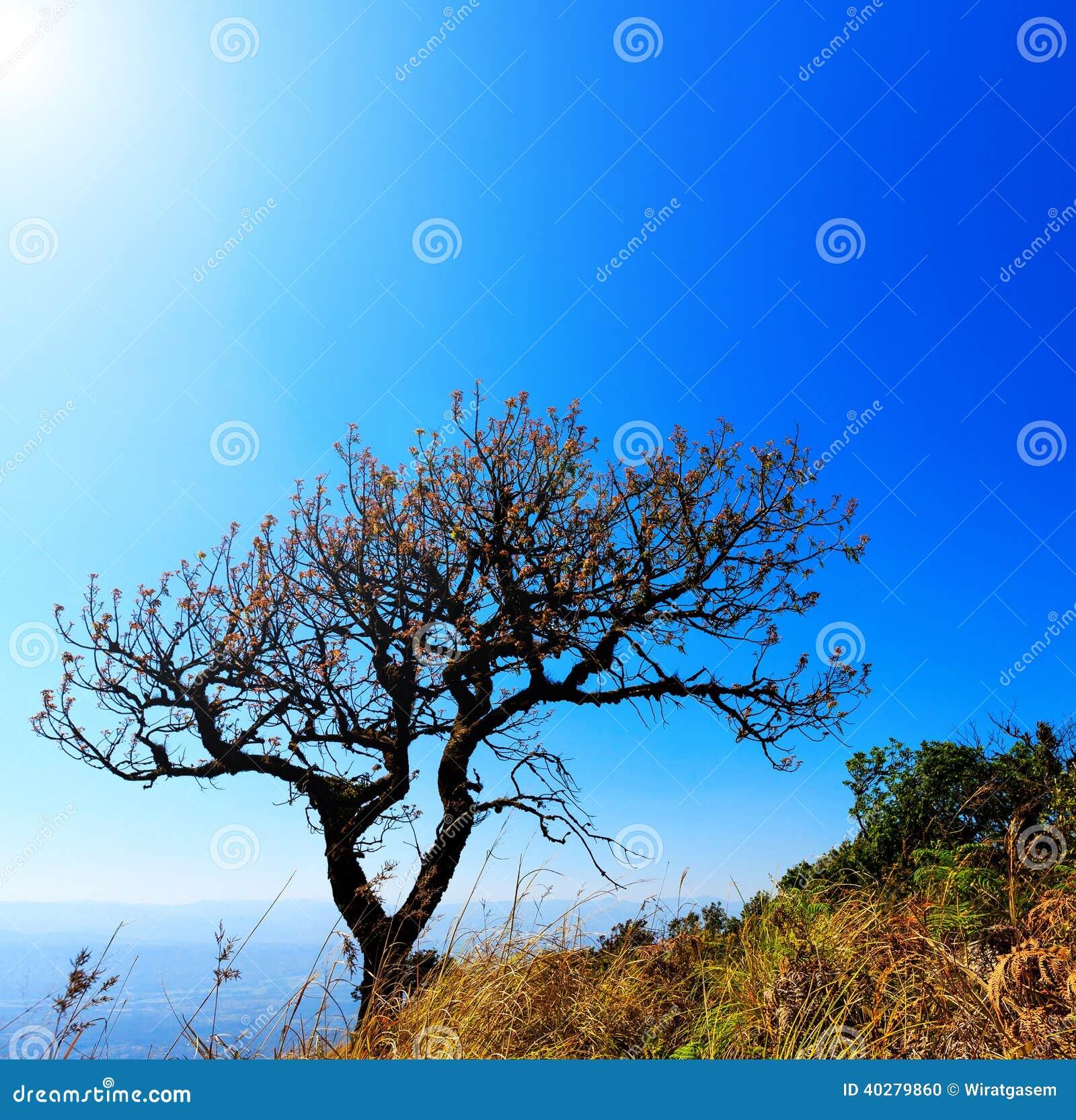 Дерево на горе высоты