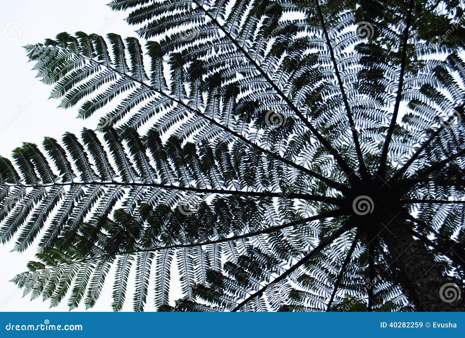 Дерево папоротника