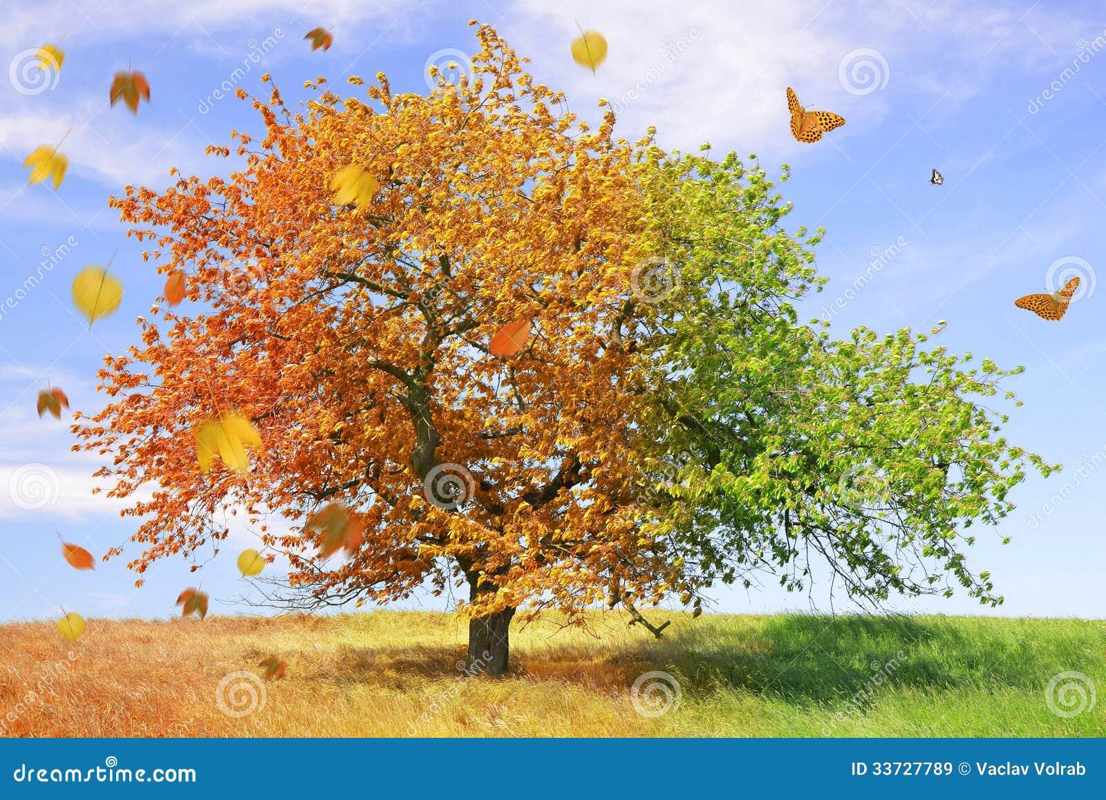 Дерево сезона