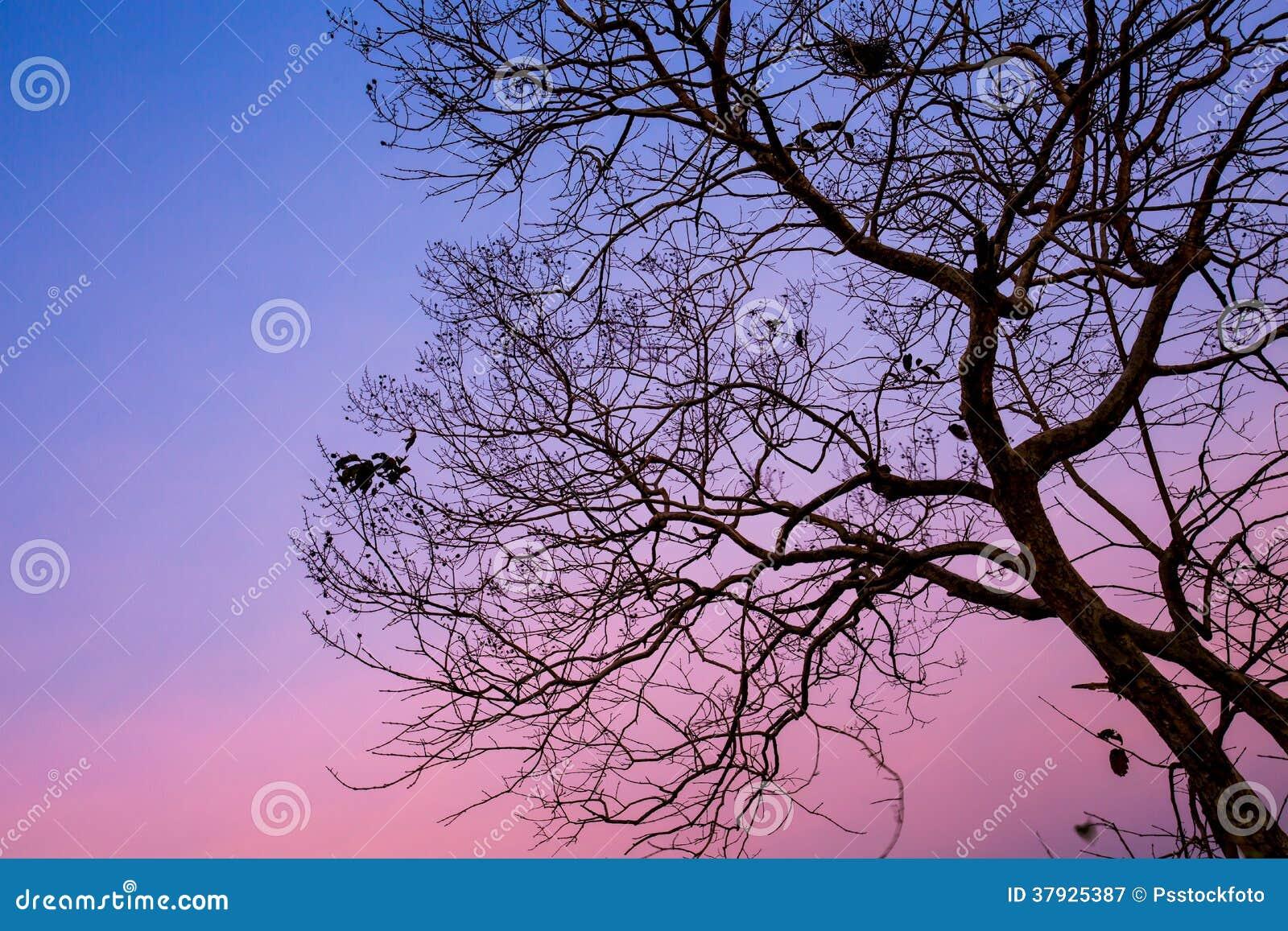 Дерево силуэта