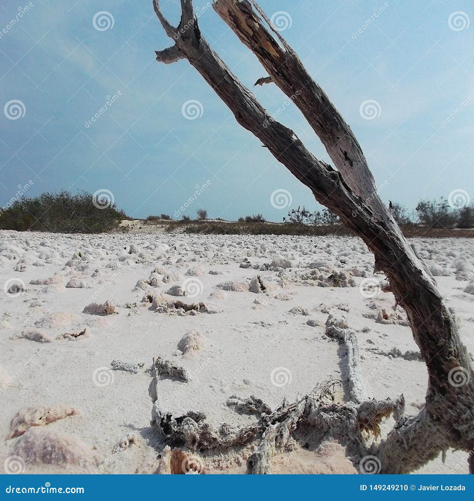 Дерево умирает в сухом соли