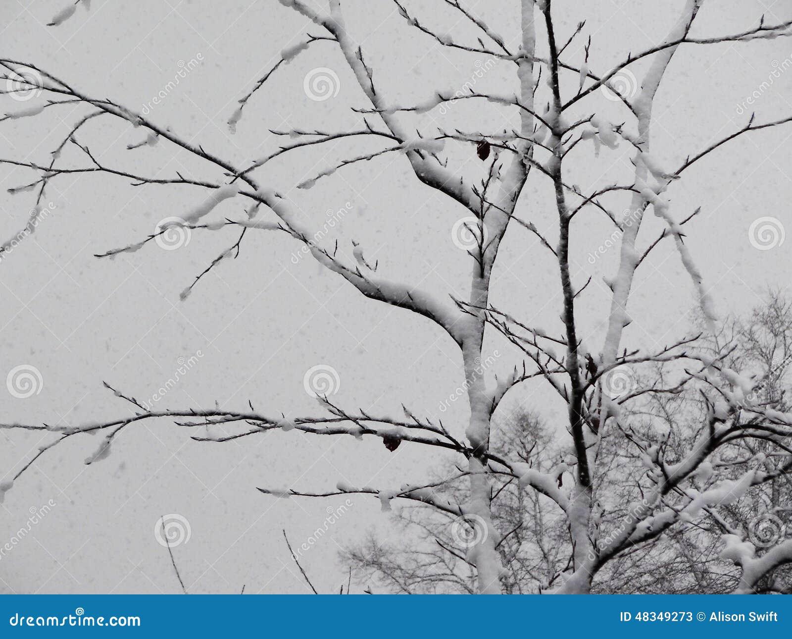 Деревья в снежке