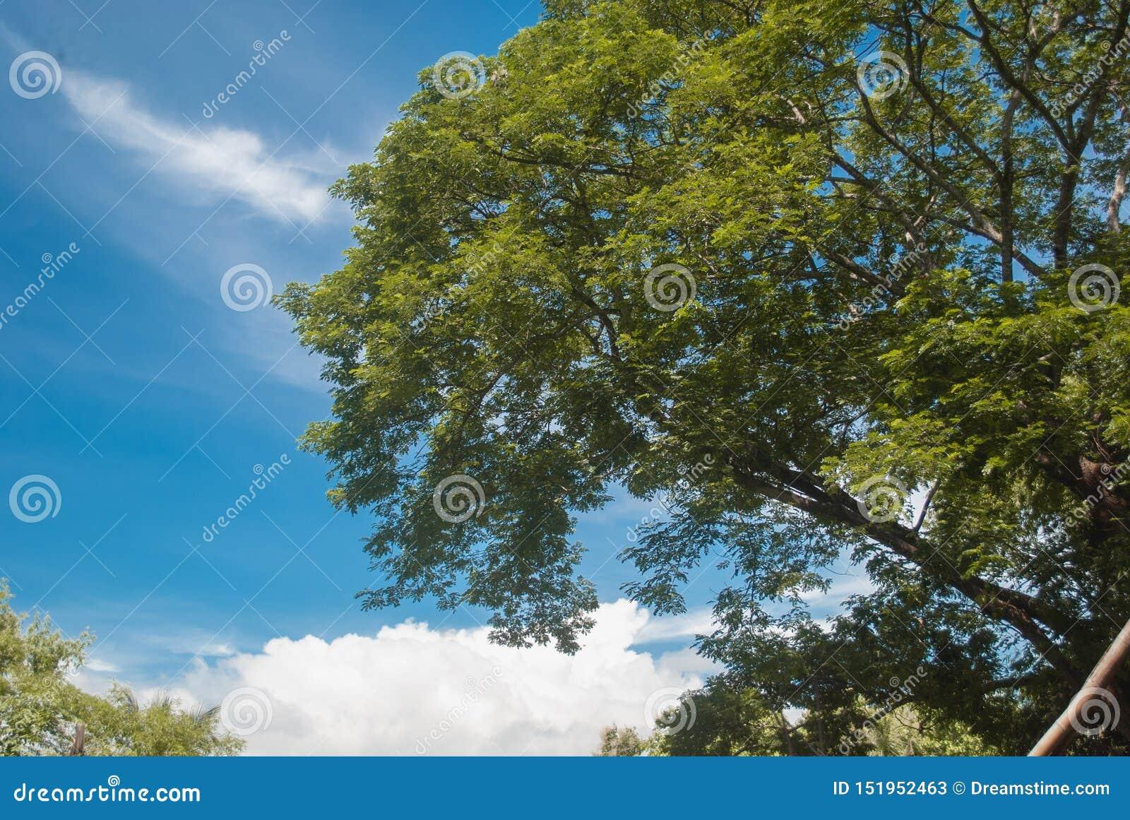 Деревья дневного времени