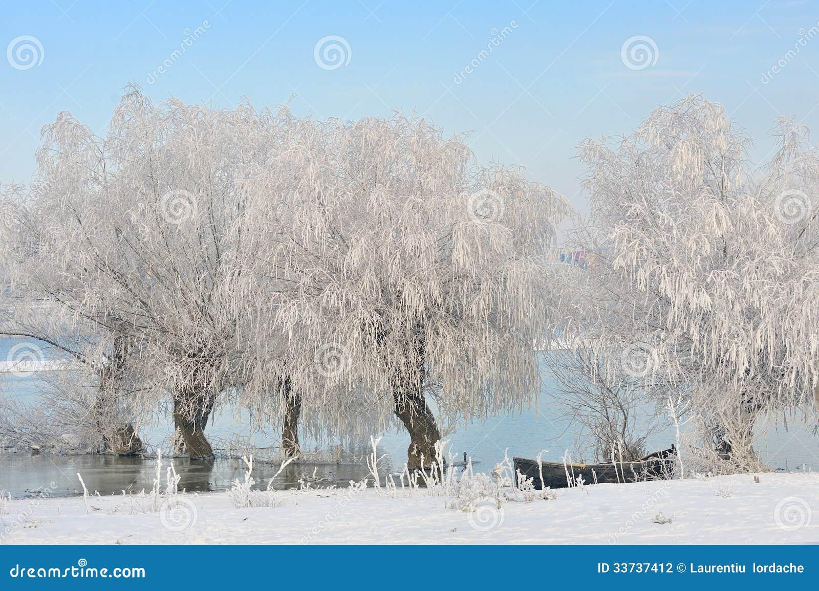 Деревья зимы предусматриванные с заморозком