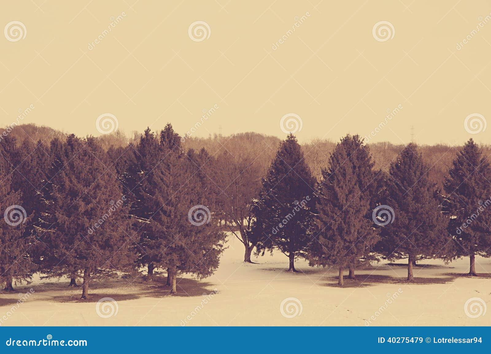 Деревья зимы
