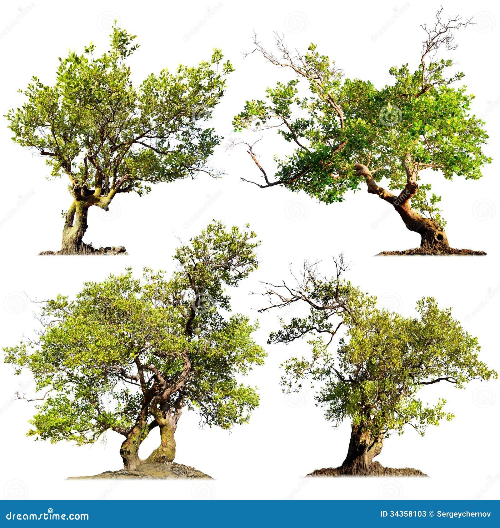 Деревья изолированные на белой предпосылке. Зеленые заводы природы