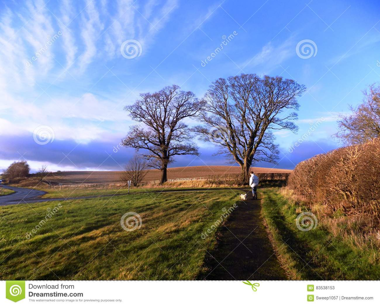 Деревья и загородка, в северном Нортумберленде, Англия Великобритания