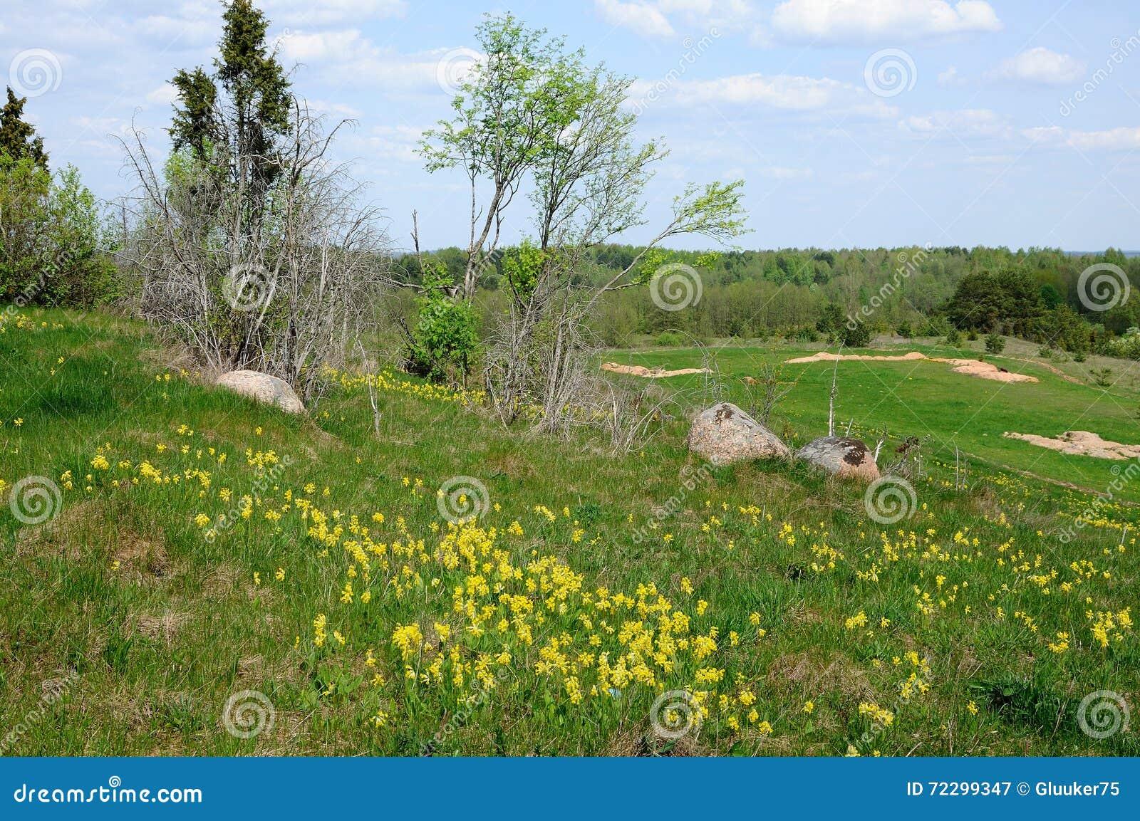 Download Деревья и камни в зеленой траве Стоковое Изображение - изображение насчитывающей green, холм: 72299347