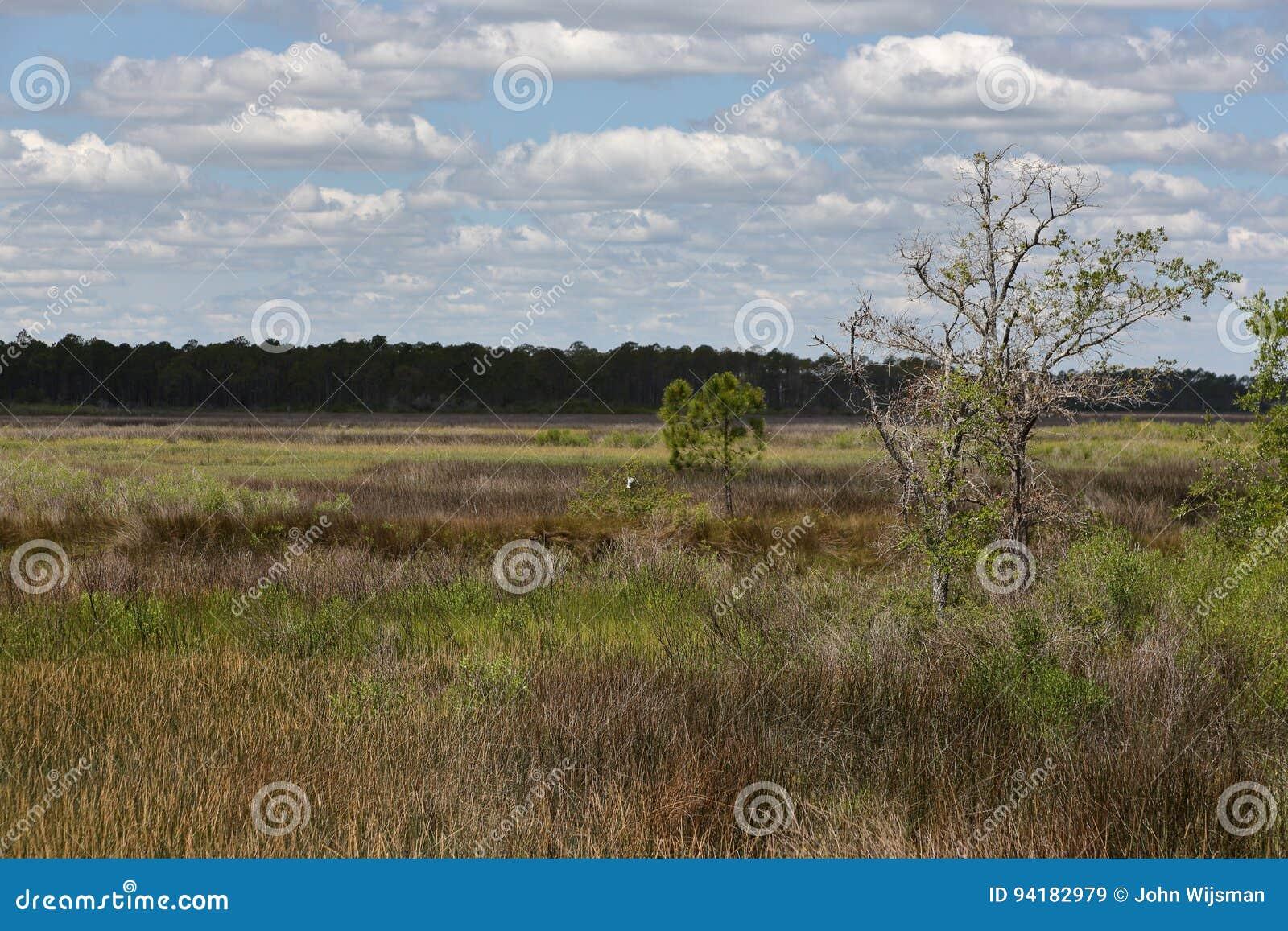 Деревья и травы в болоте соленой воды с голубым небом и облаками