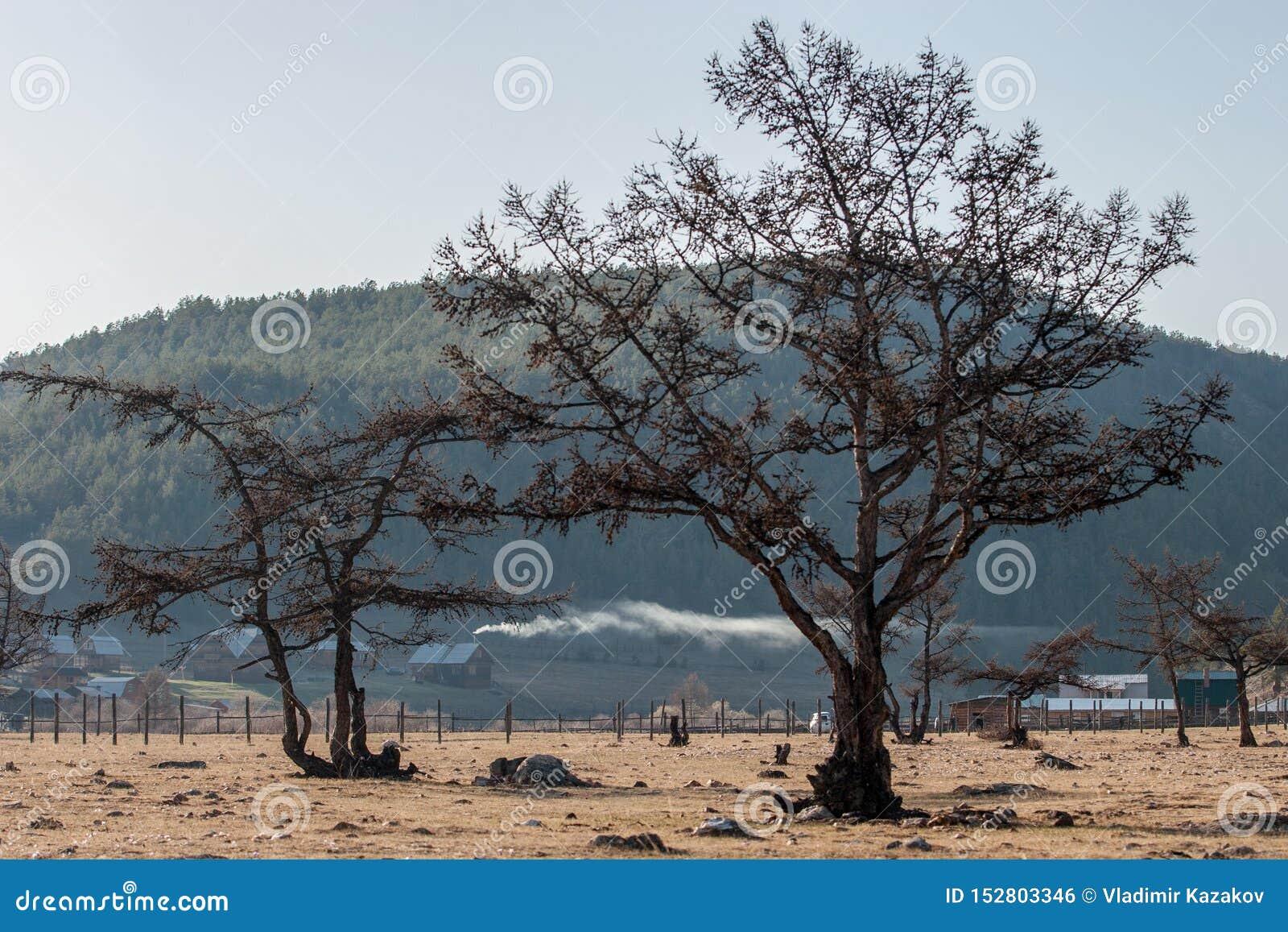 Деревья на предпосылке гор с деревянными старыми домами С красивым дымом от каминов