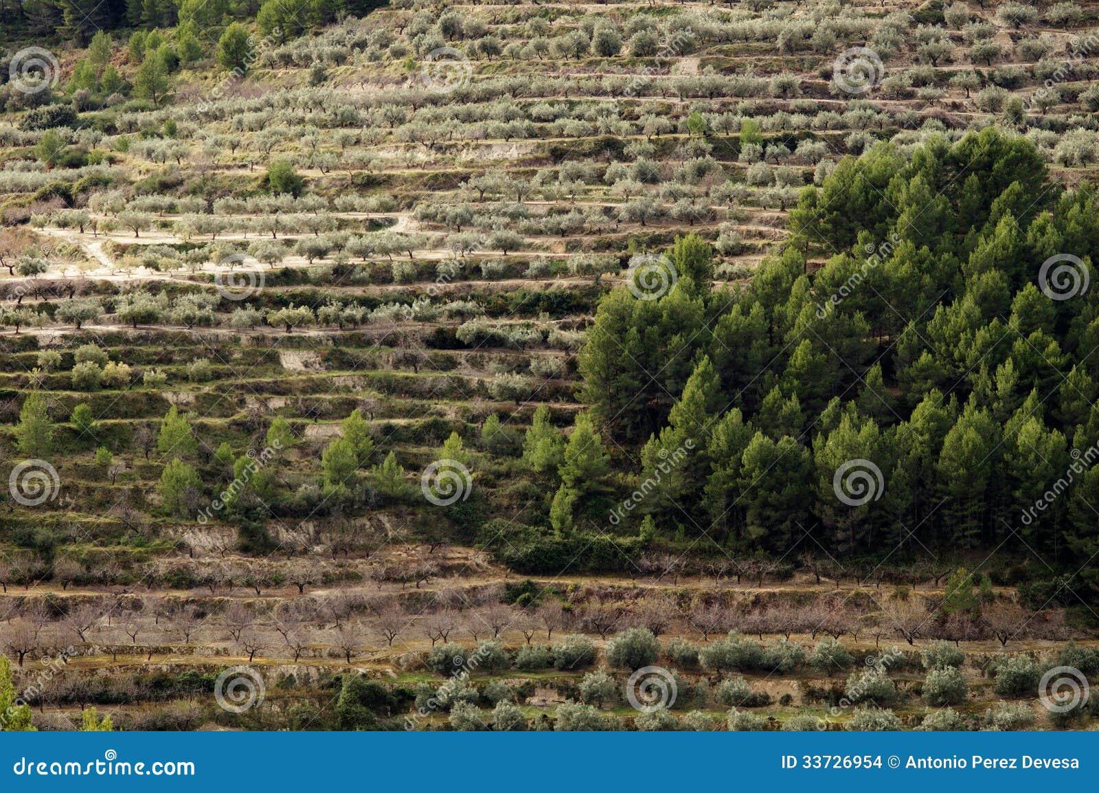 Деревья на террасах