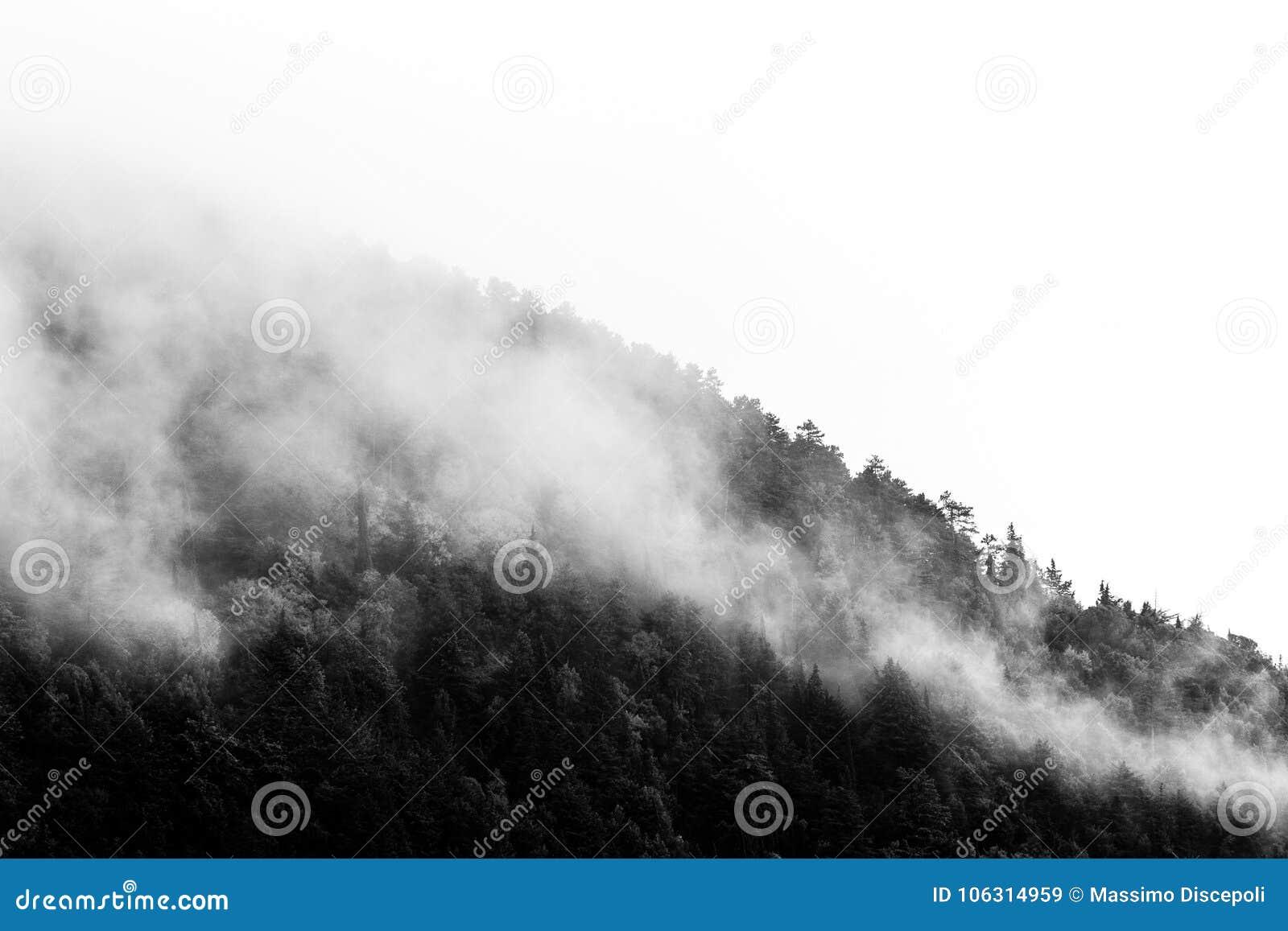 Деревья на sidealmost горы покрытом туманом