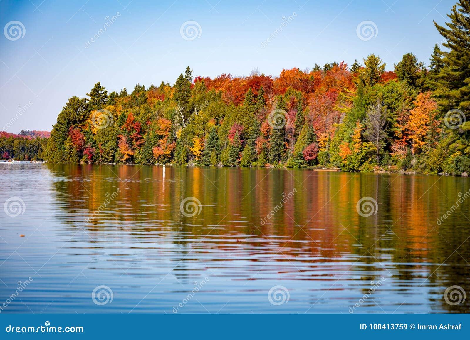 Деревья падения с озером