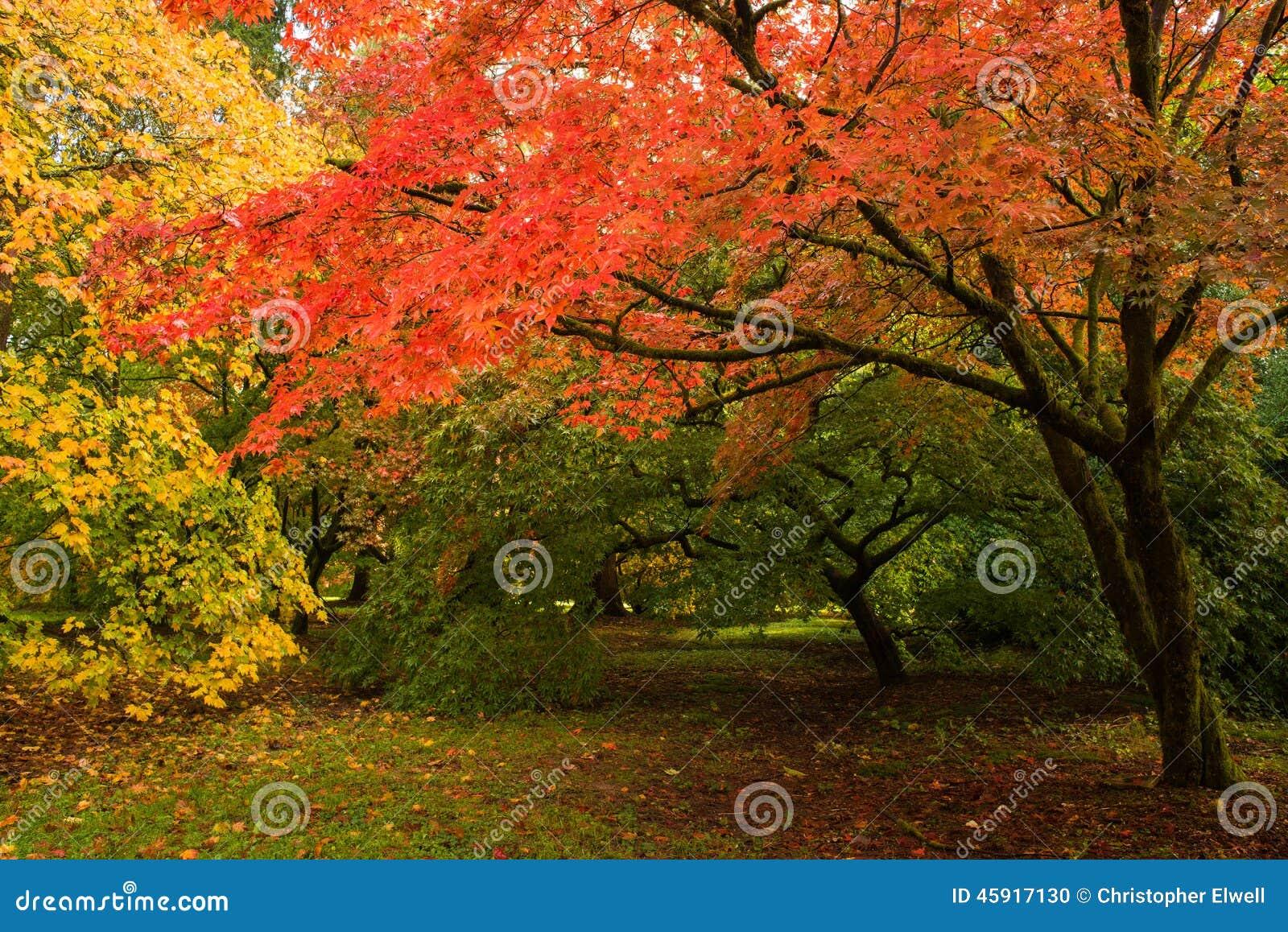 Деревья падения
